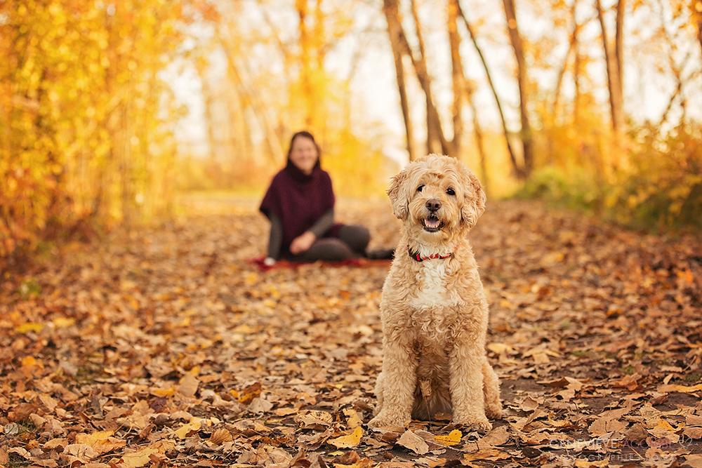 Petit goldendoodle à l'automne
