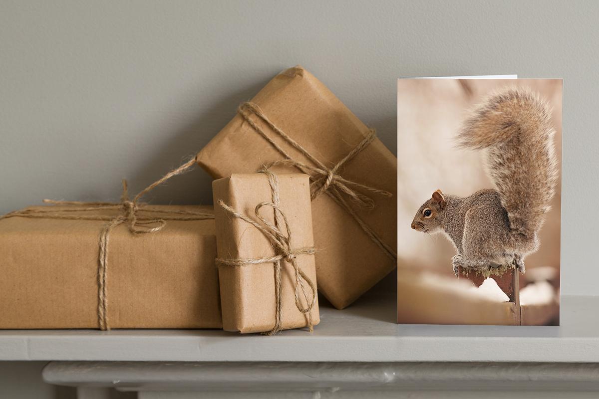 Carte de souhait avec photo écureuil