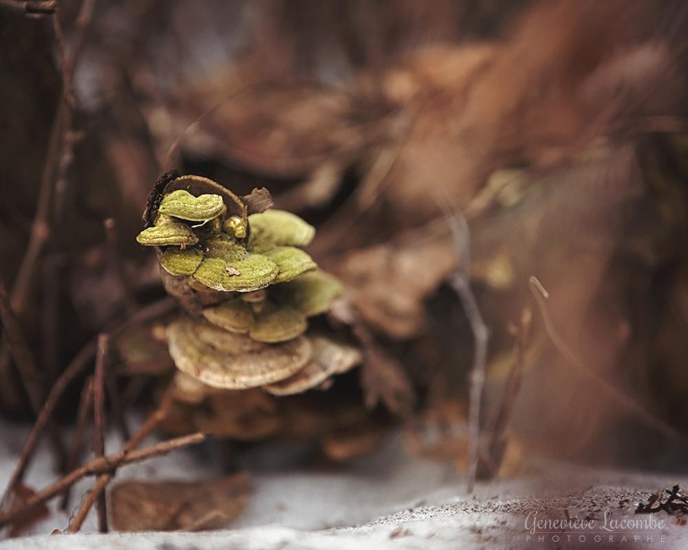 Champignons verts au printemps