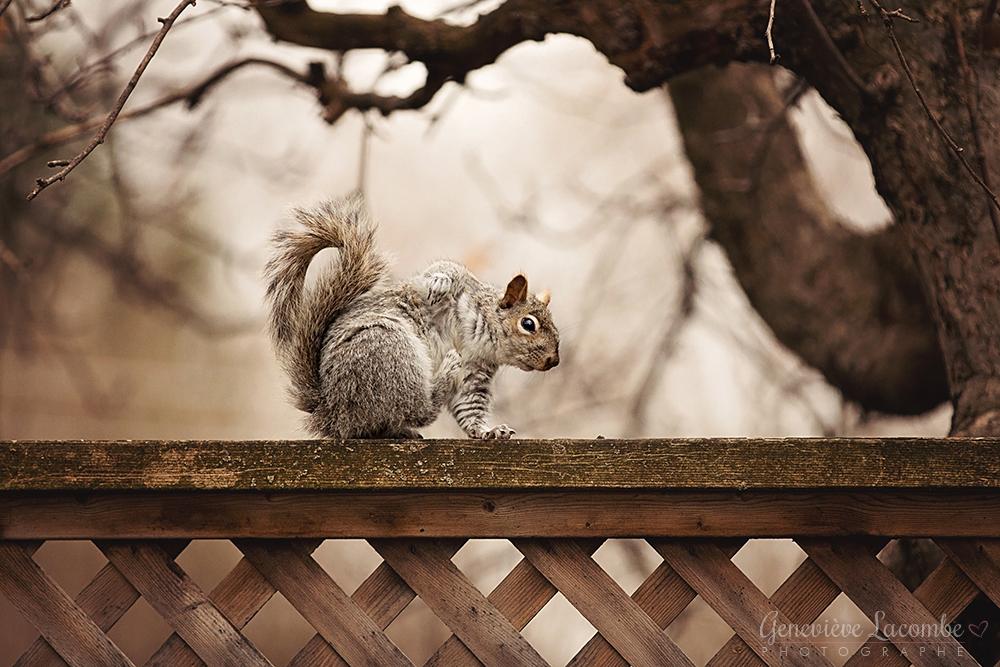 Écureuil qui se gratte