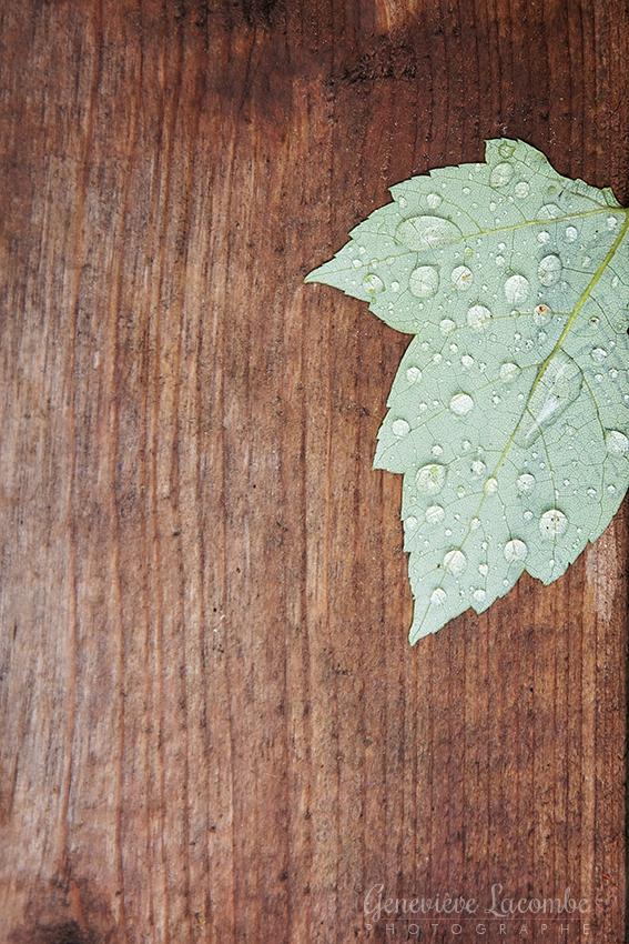Feuille d'érable et gouttes de pluie