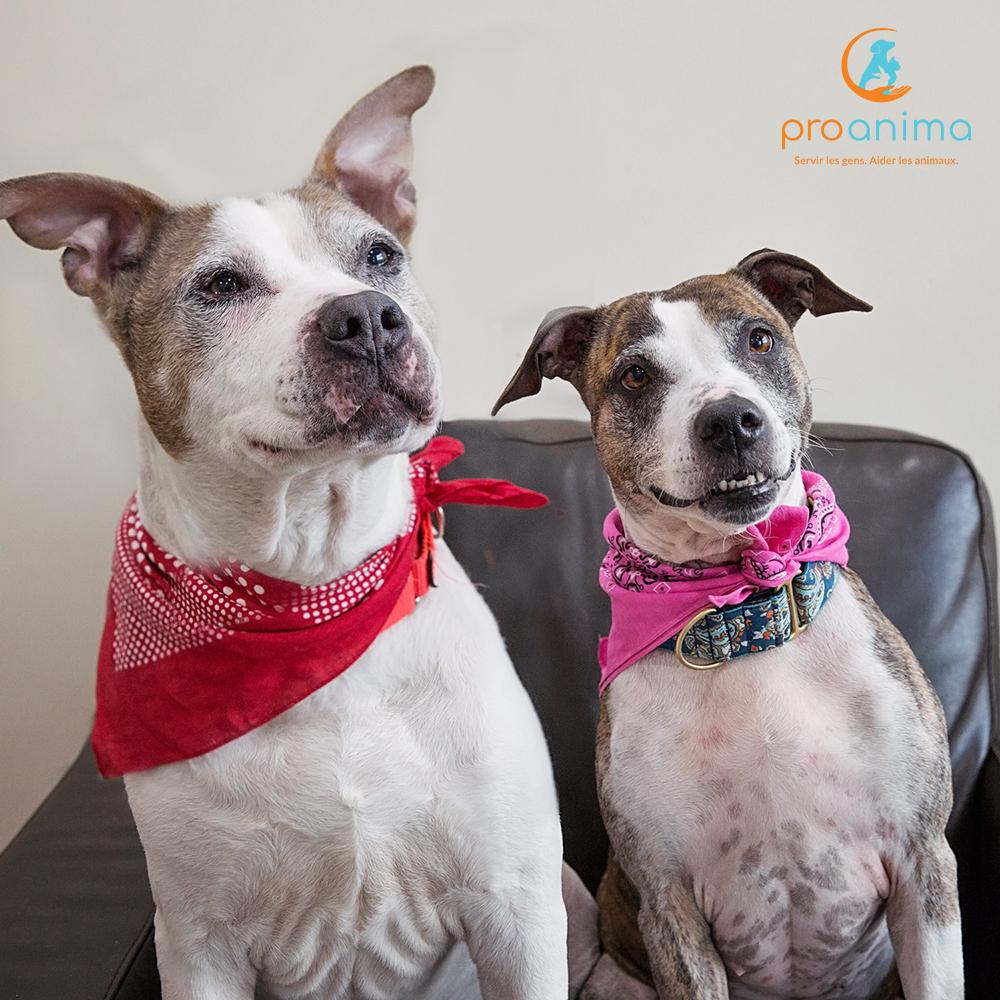 Deux chiens âgés races mélangées
