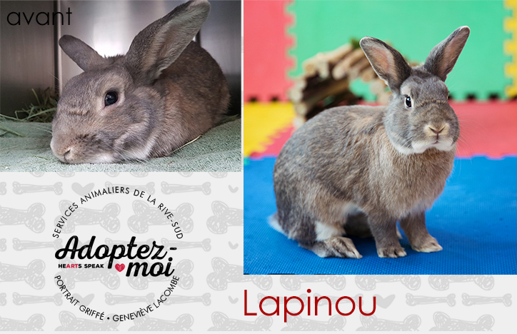 Photo lapin au refuge