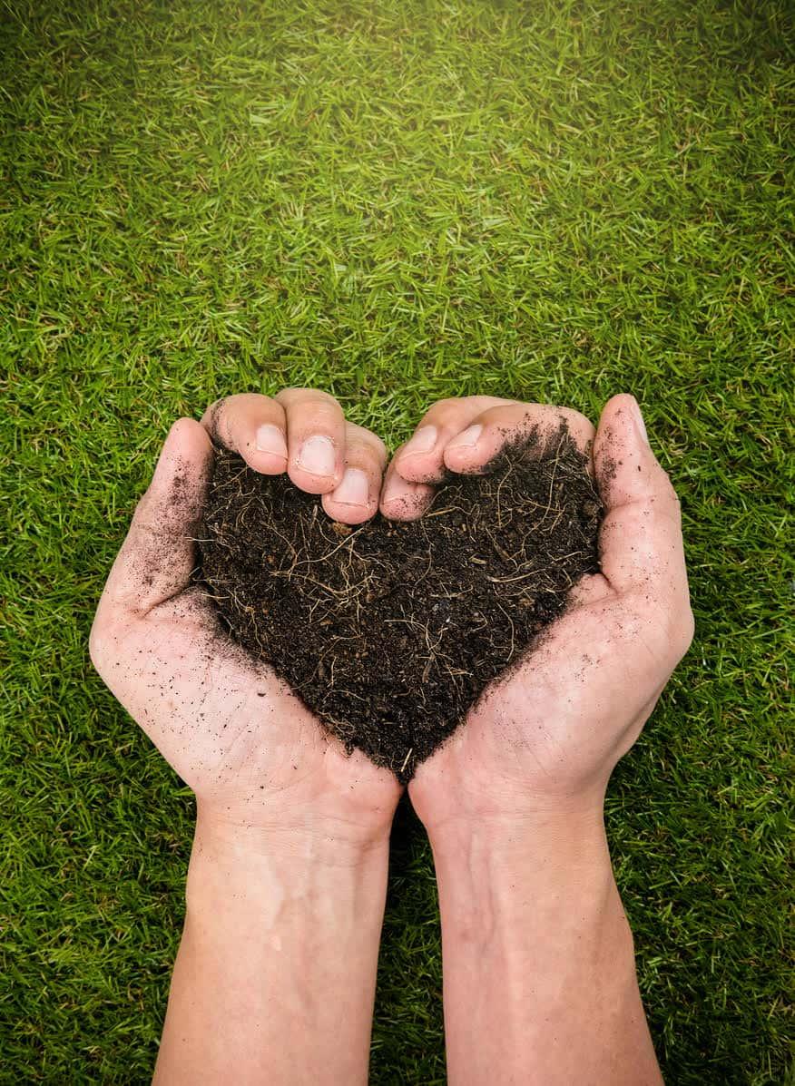 Fertilisation de la terre pour le gazon