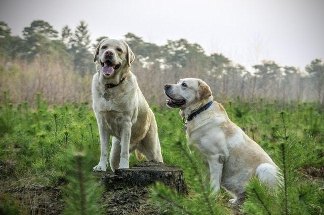 두 마리의 개를 조심하라