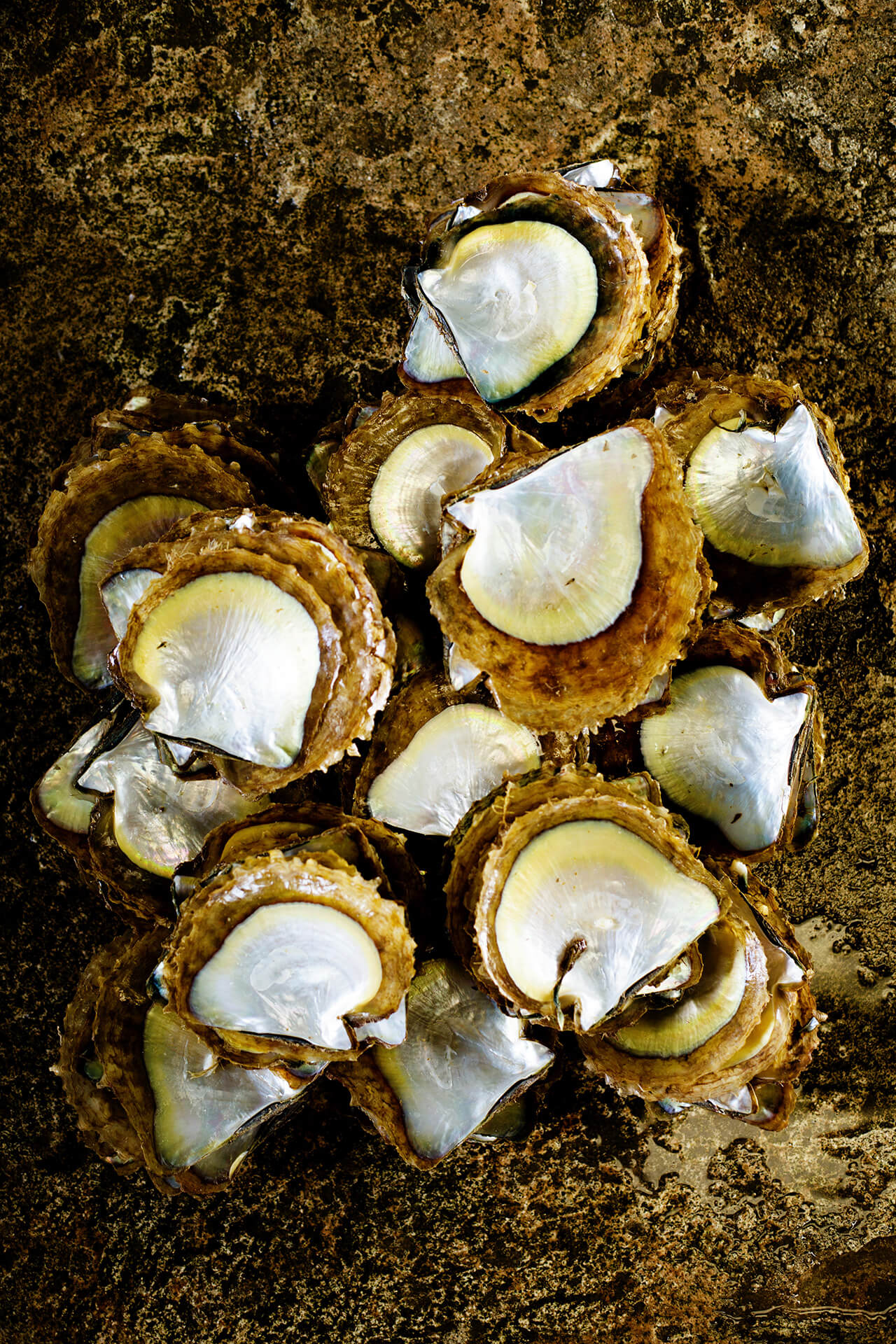 Treasure Island - Shells of the Pinctada maxima, the largest of the pearl oysters, and capable of producing the rarest of the South Sea pearls