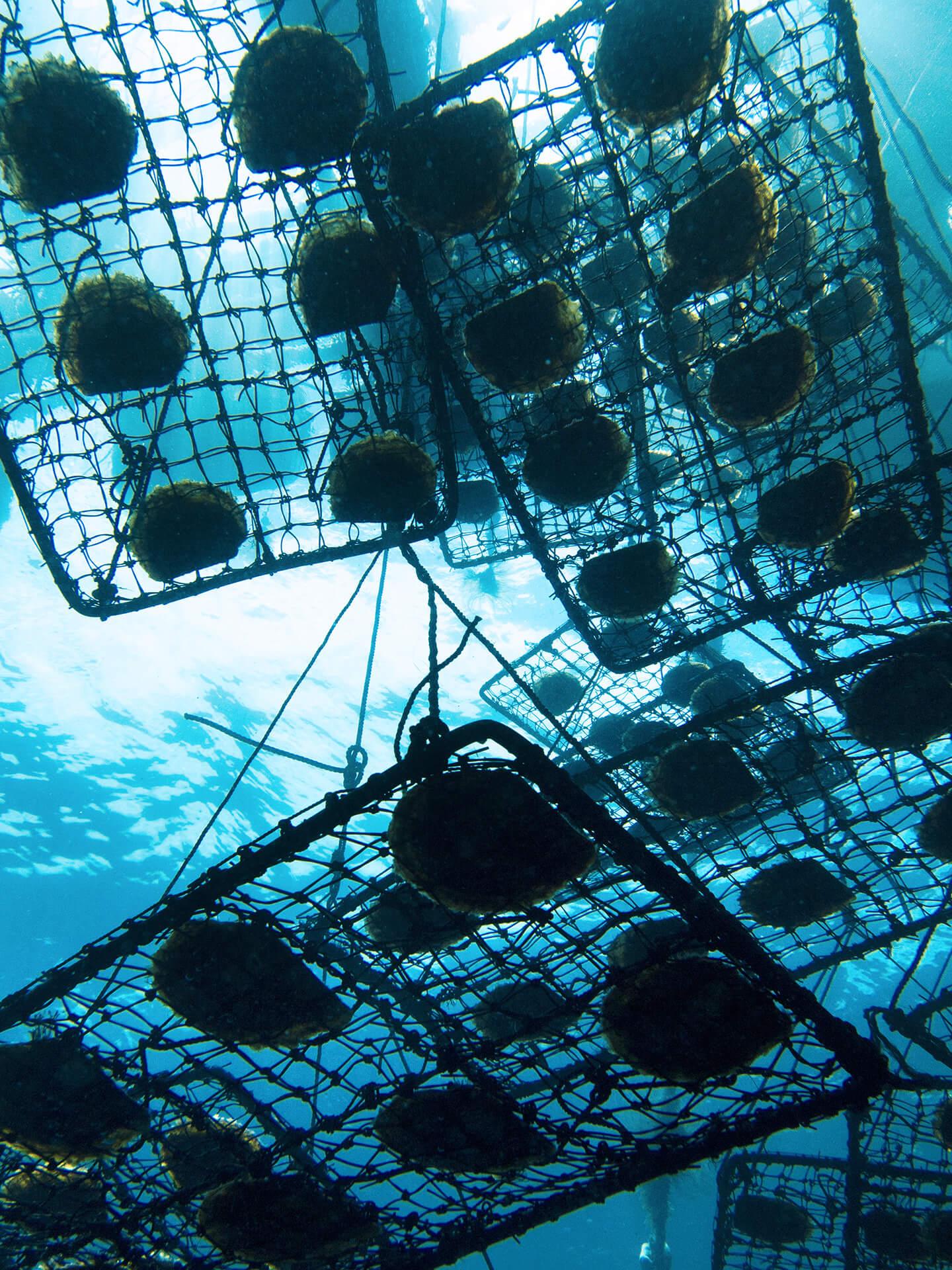 Treasure Island - Culturing South Sea Pearls