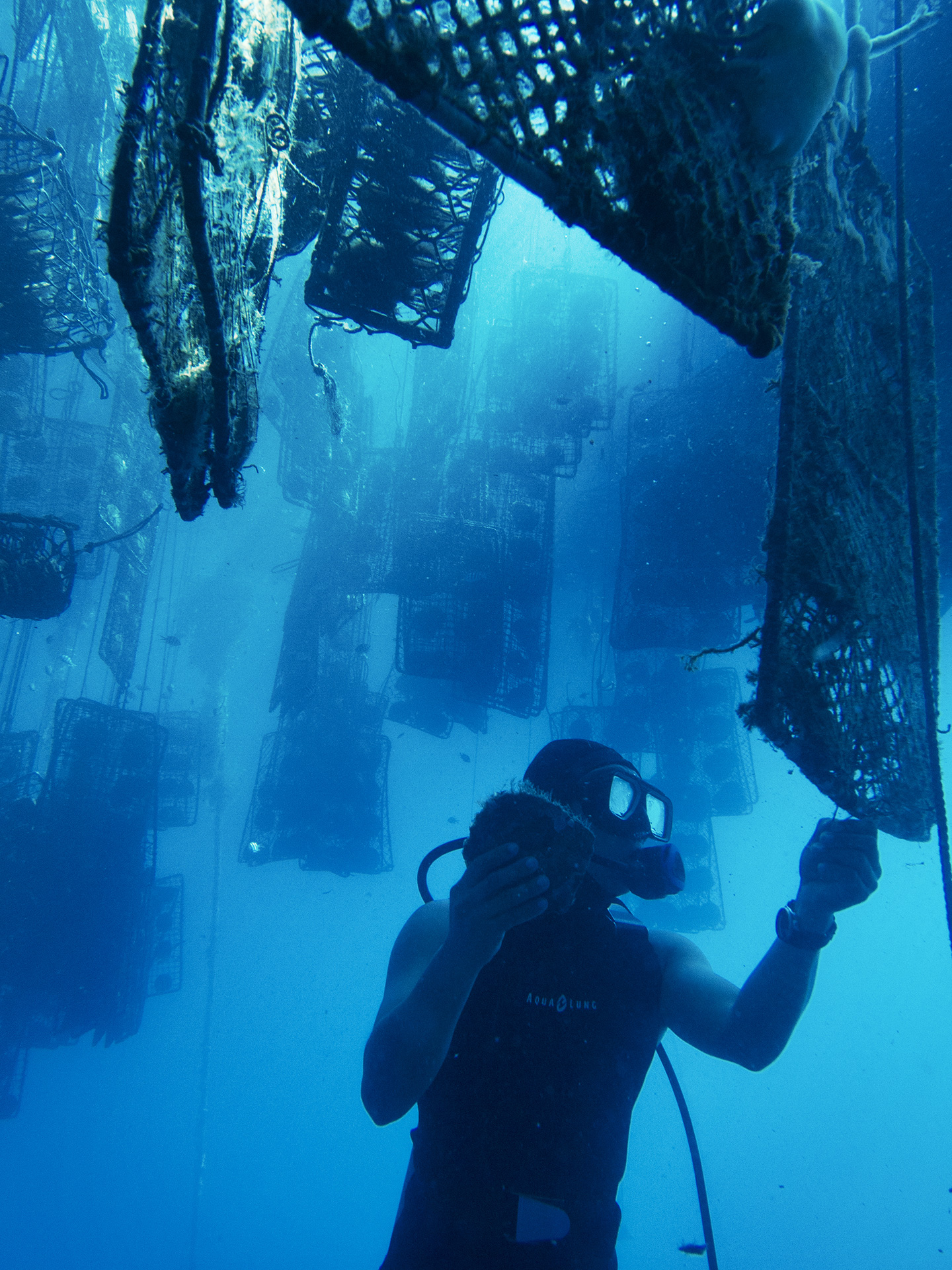 Treasure Island - Divers and other farmers dive each morning to coax the perfect pearl