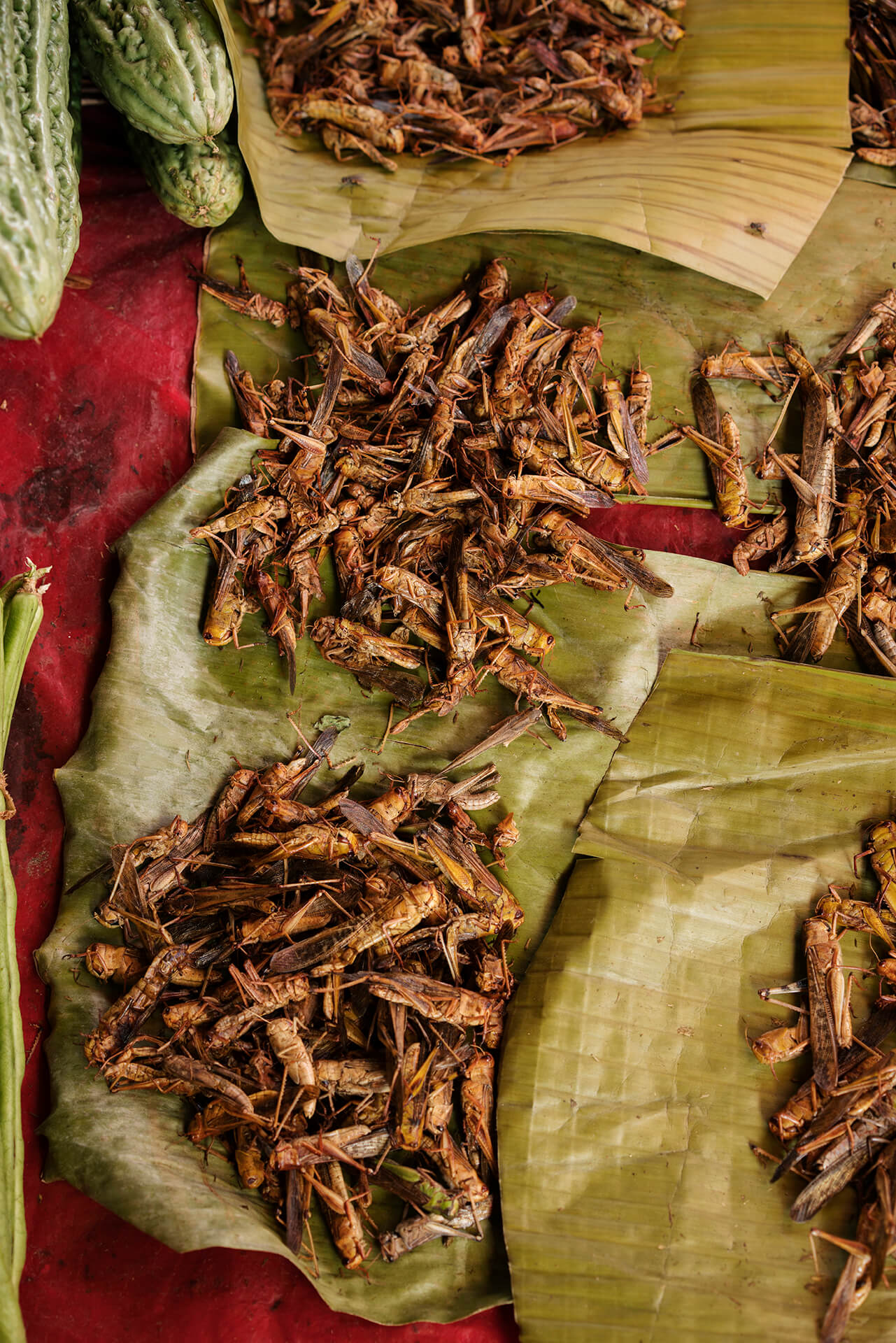 Deep-fried locusts or tapudi are trimmed off their sharp and unwholesome parts before they are deep-fried in oil.