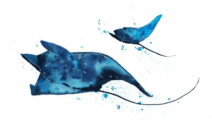 Manta ray watercolor illustration by Kitt Santos
