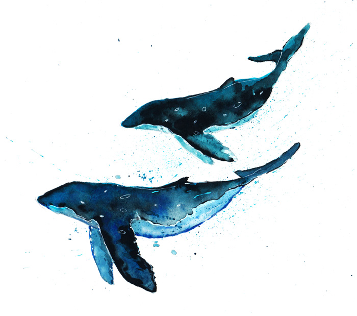 Whales watercolor illustration by Kitt Santos