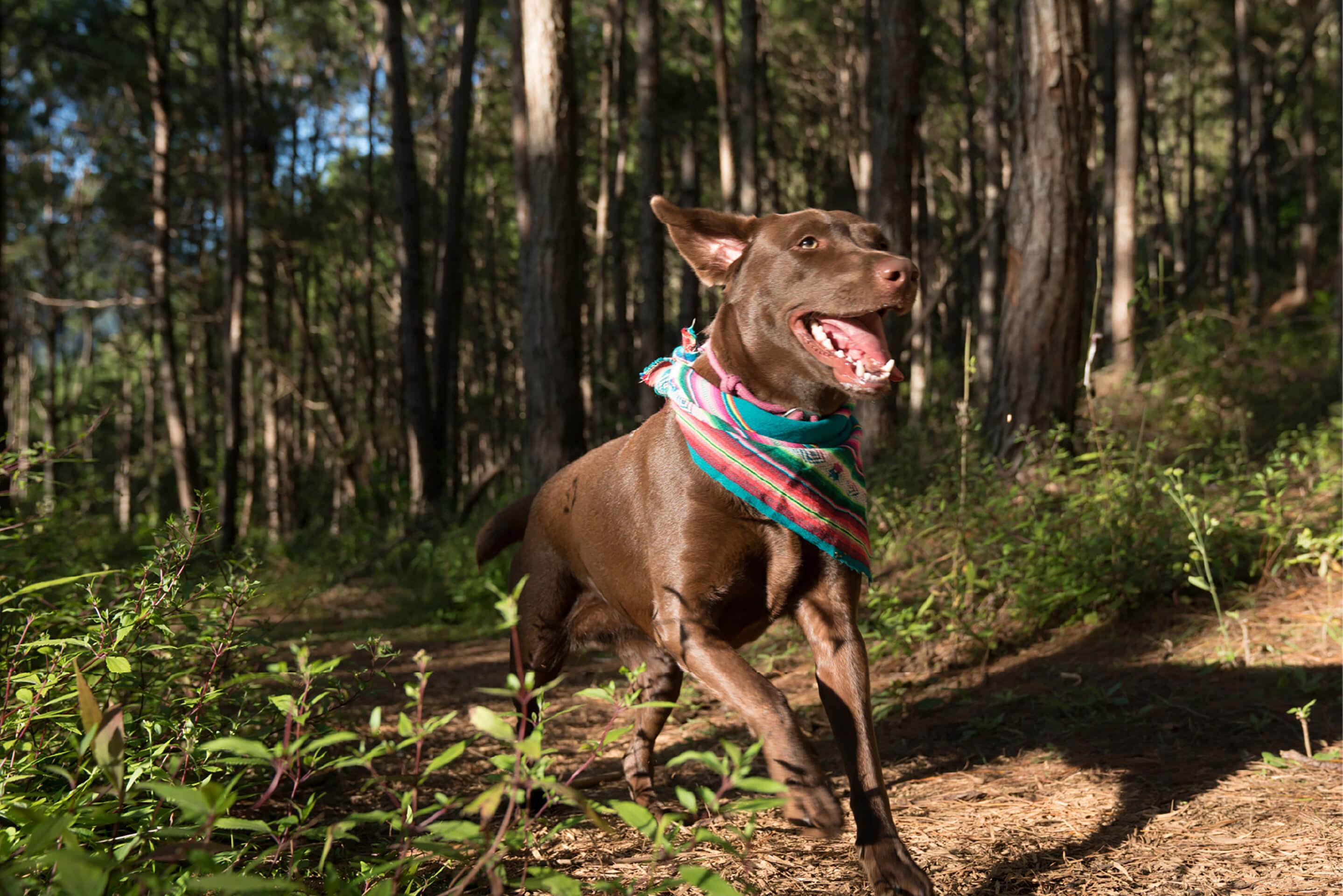 CCT founder JP Alipio's dog Pacha running through the forests