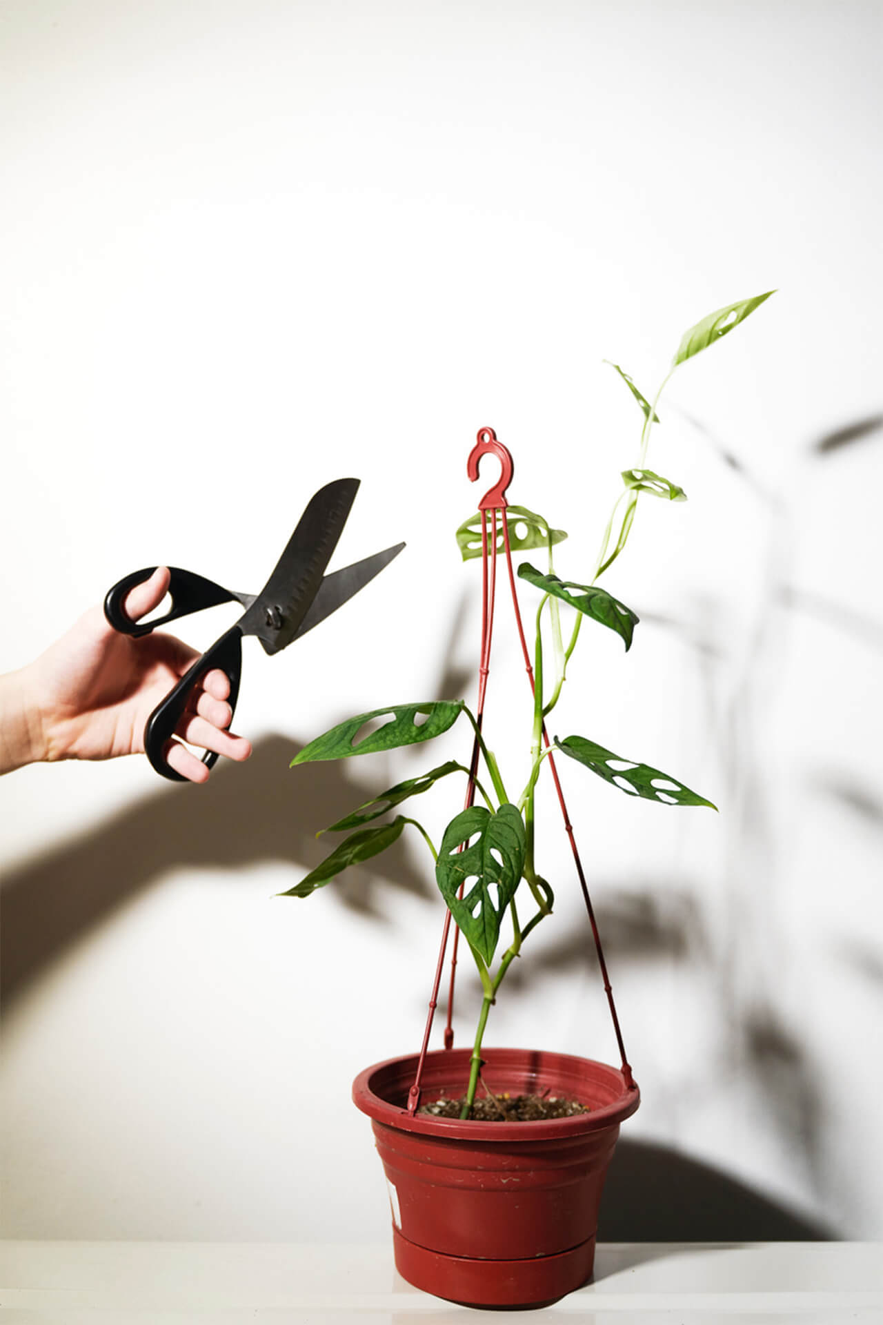 Pruning creates room for new growth, and at the same time, helps maintain the natural shape of your plants.