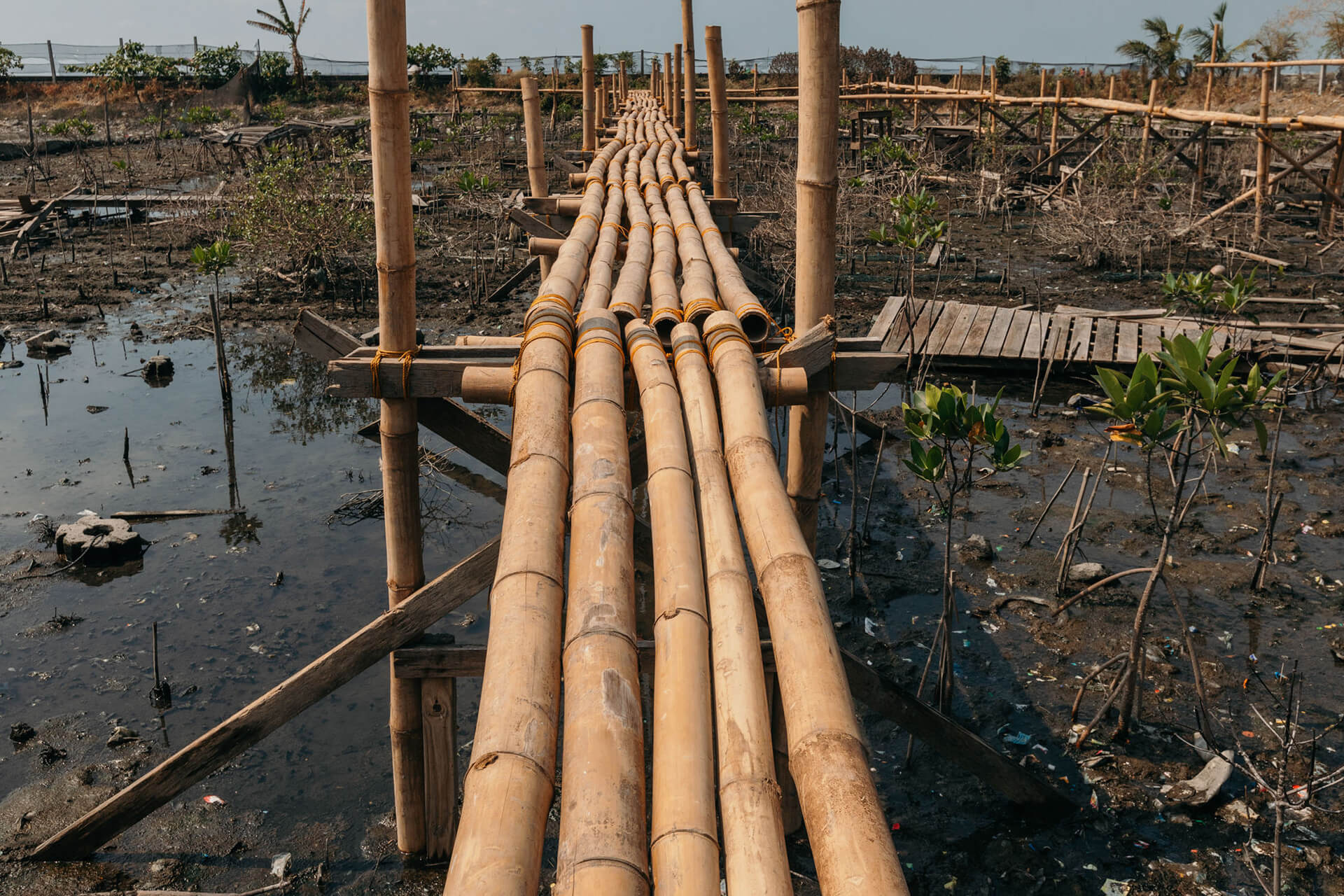 A makeshift bamboo footbridge over a rehabilitated area