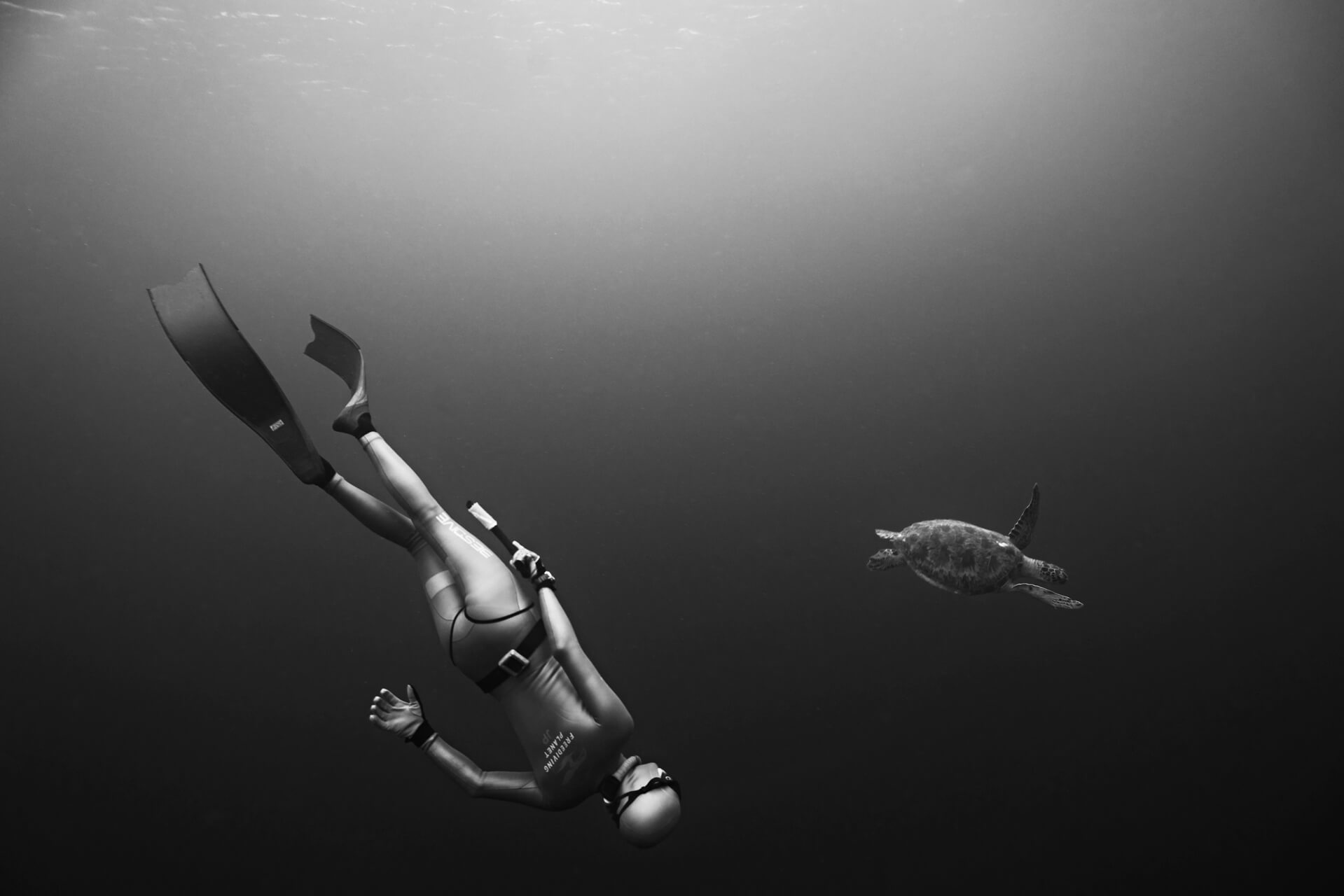 freediver and a turtle in black and white