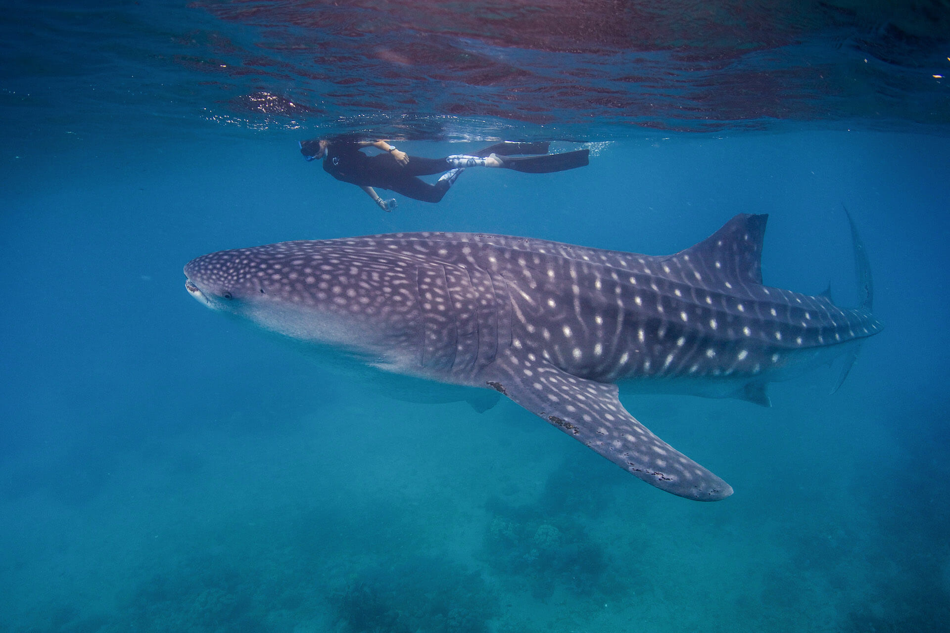 Shark populations around the world are facing rapid rates of decline. What could that mean for us? Scientist and LAMAVE Project Lead Ariana Agustines talks about local shark conservation, and what travelers can do to help.