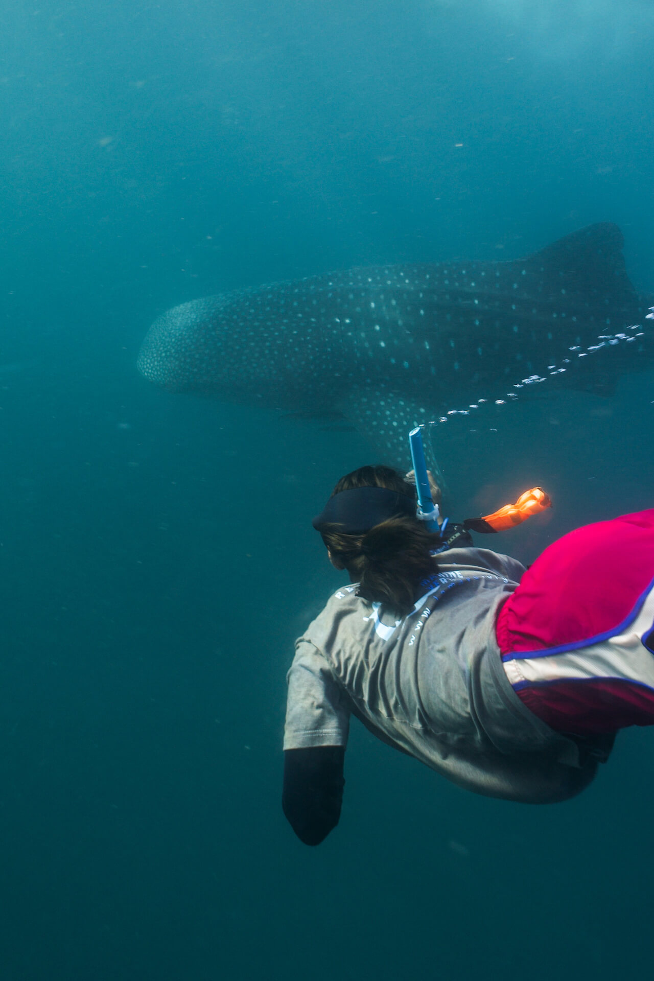 Ariana Agustines swims near a whale shark
