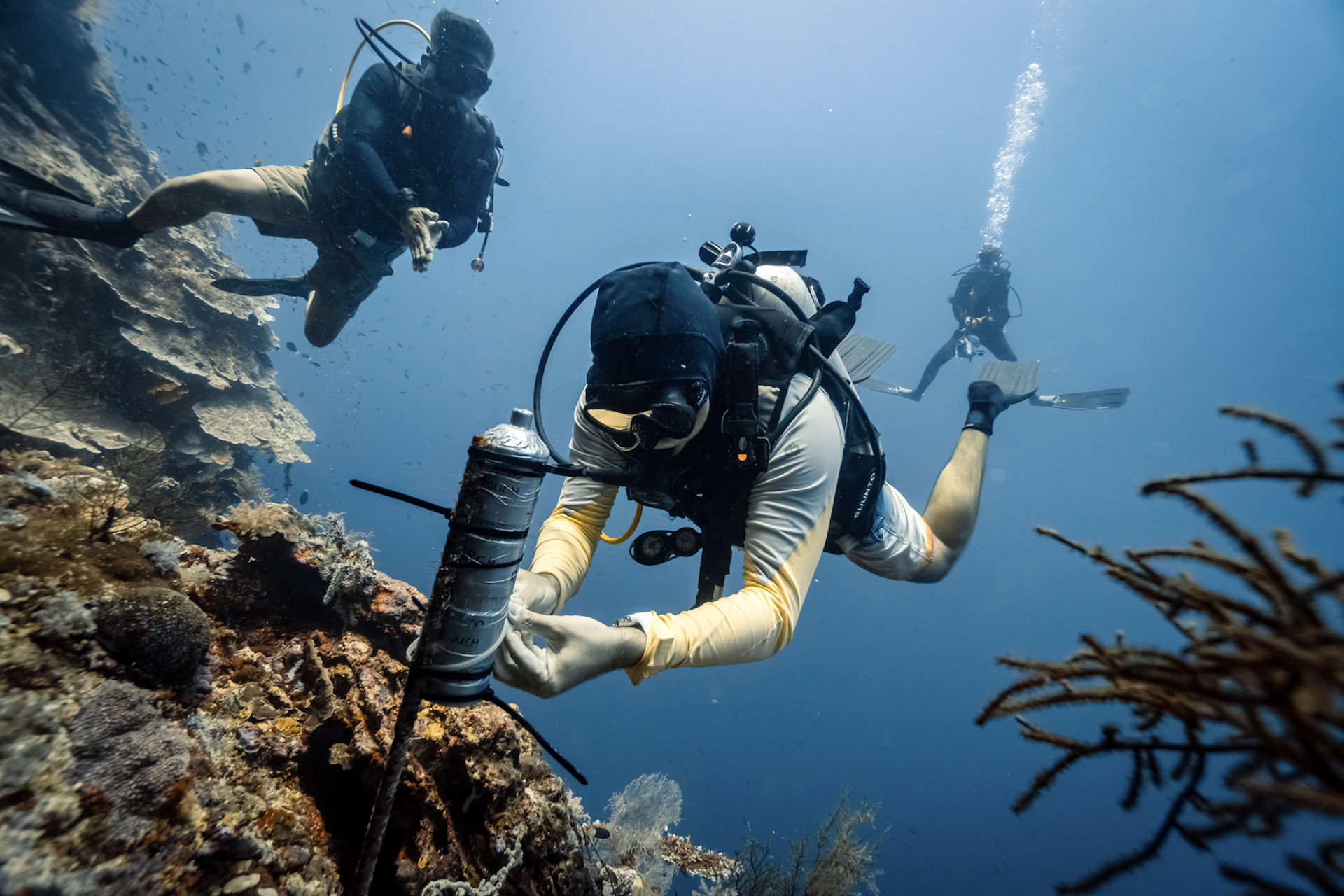 LAMAVE's team scuba diving to conduct research