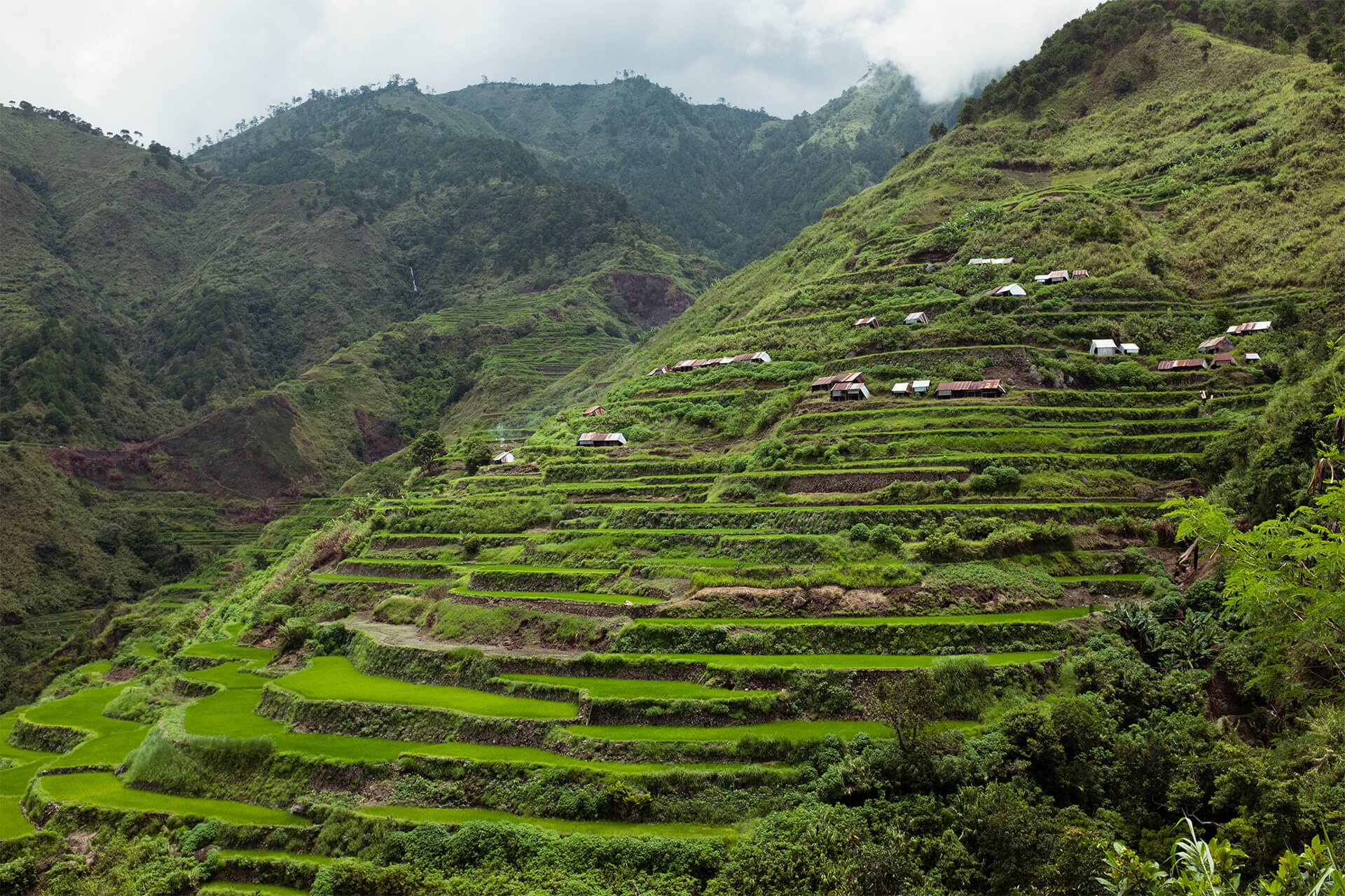 Rice terraces in Buscalan, Kalinga