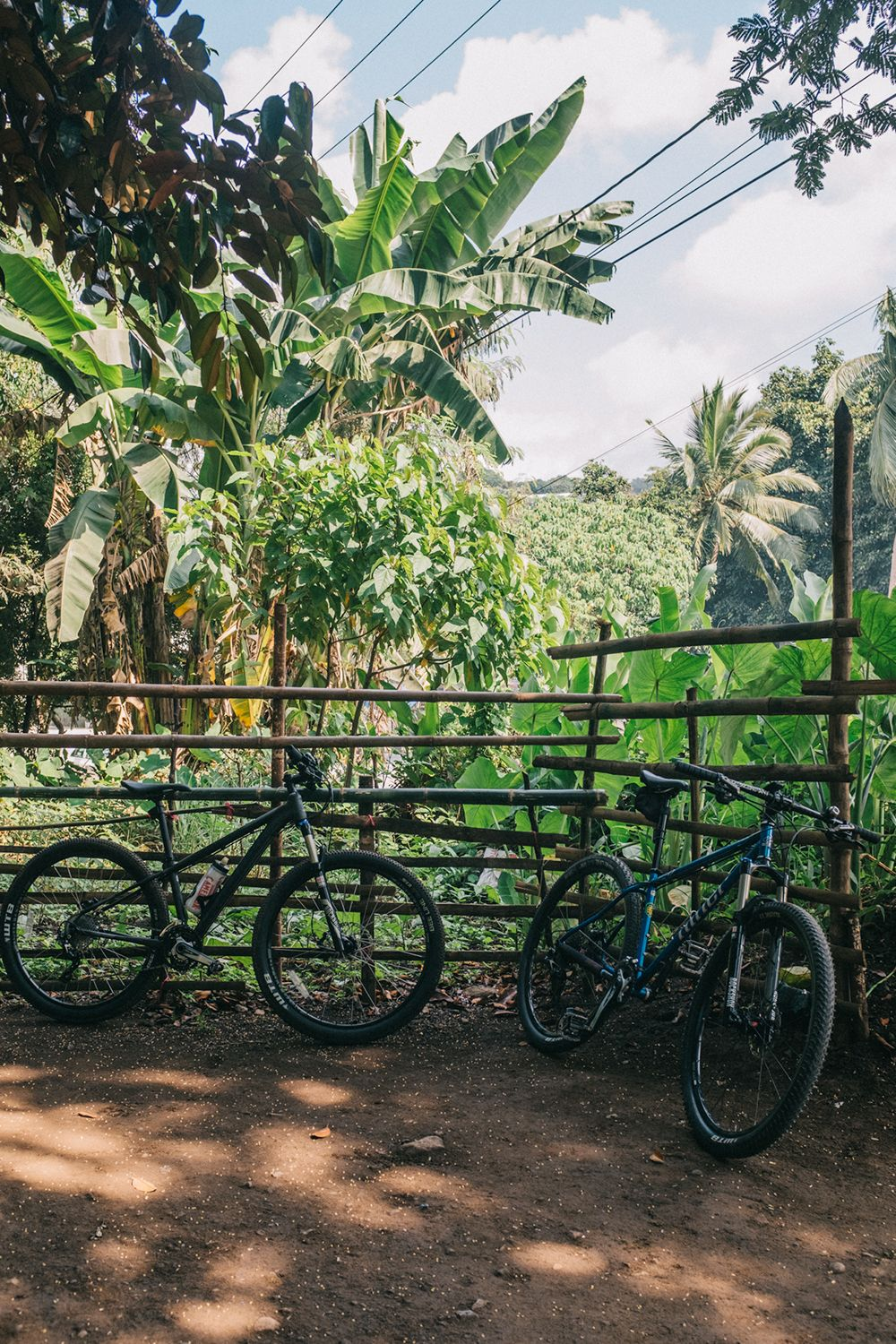 A pair of bikes lean against a bamboo fence