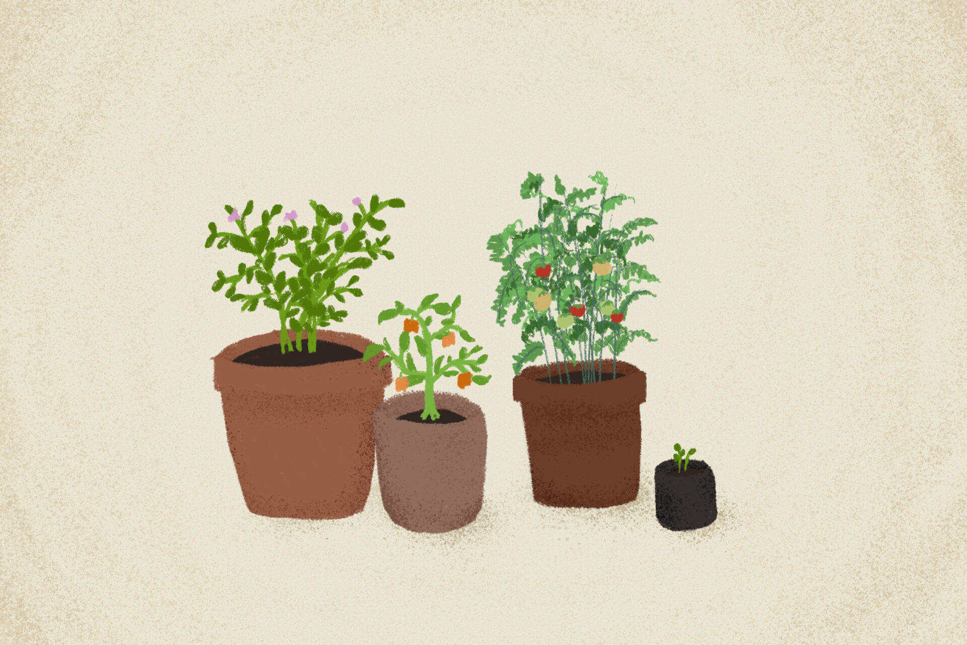 Beginner-friendly home herbs to plant, illustration by Regine Salumbre