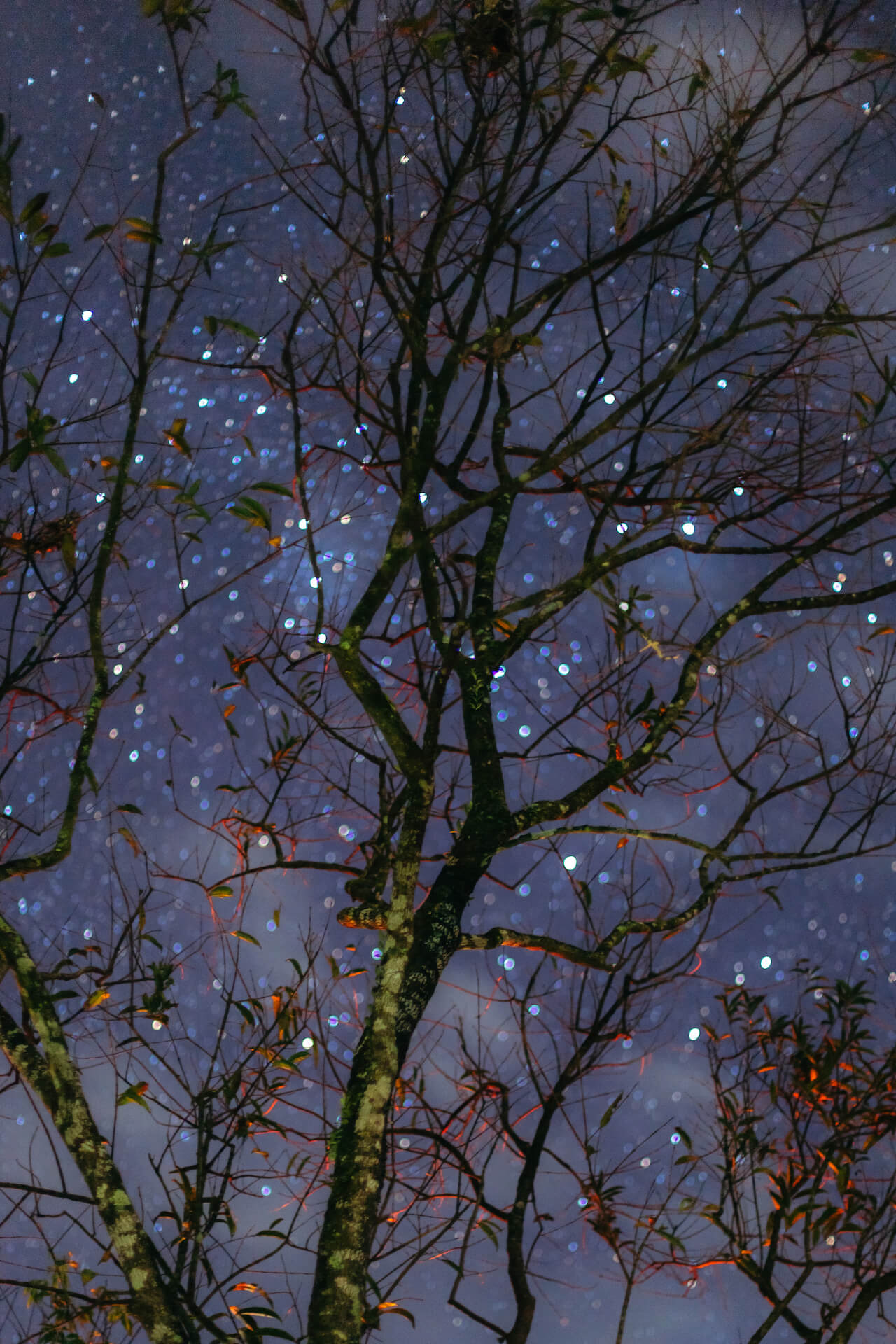 The starry sky behind a silhouette of trees