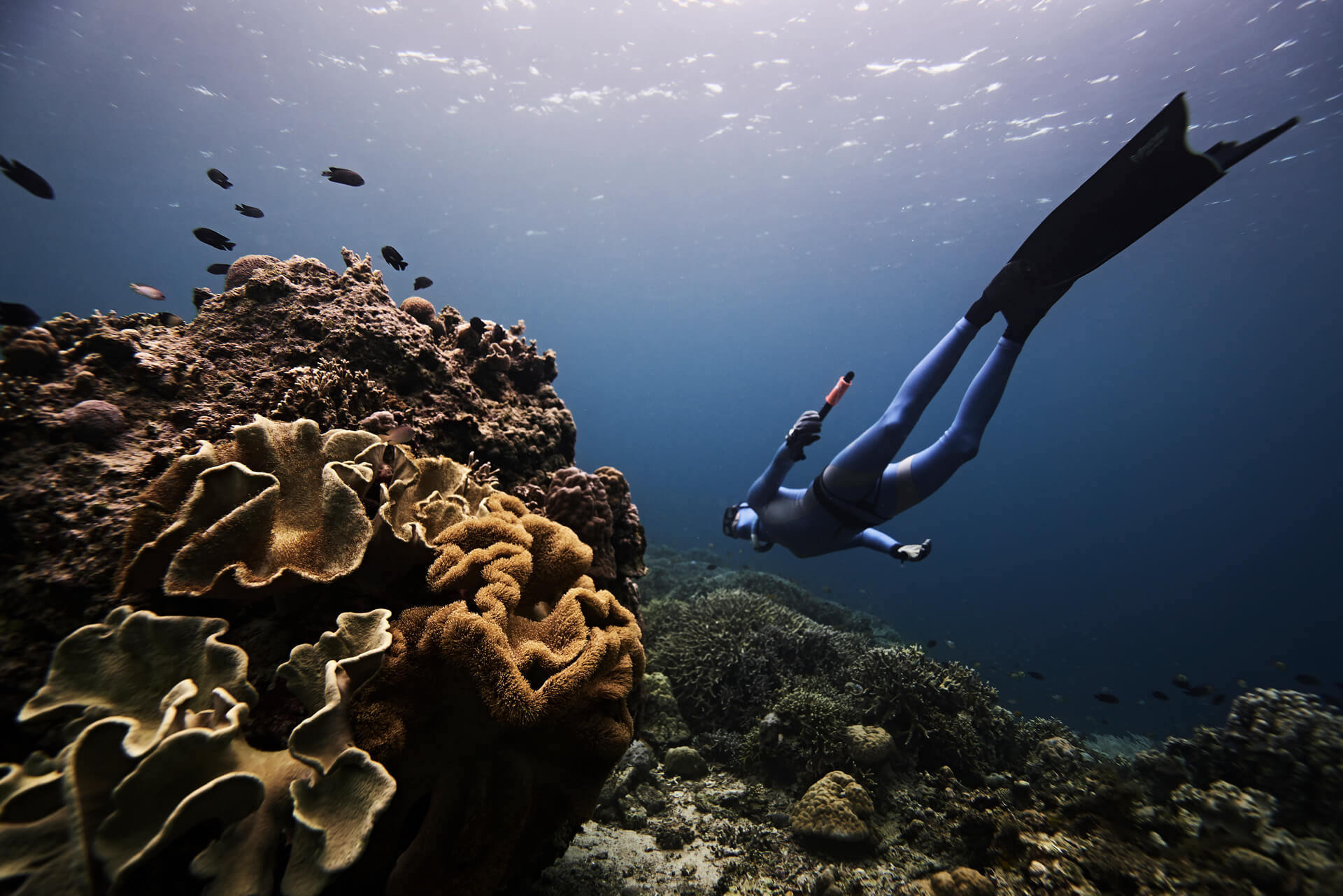 Freediver swimming by a coral reef