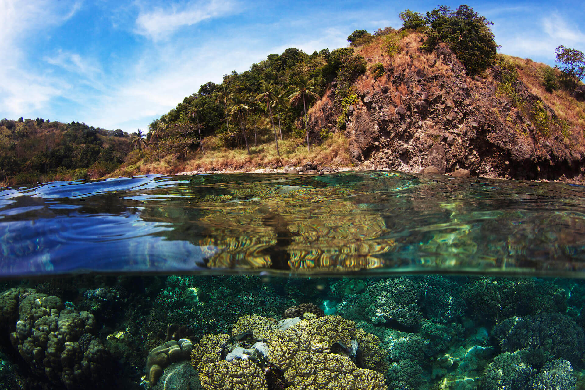 Fishermen, scientists, and environmental activists have been at work for decades inimaginary constructs called marine protected areas. This grand experiment started in Apo Island, through the work of one scientist, nearly 40 years ago.