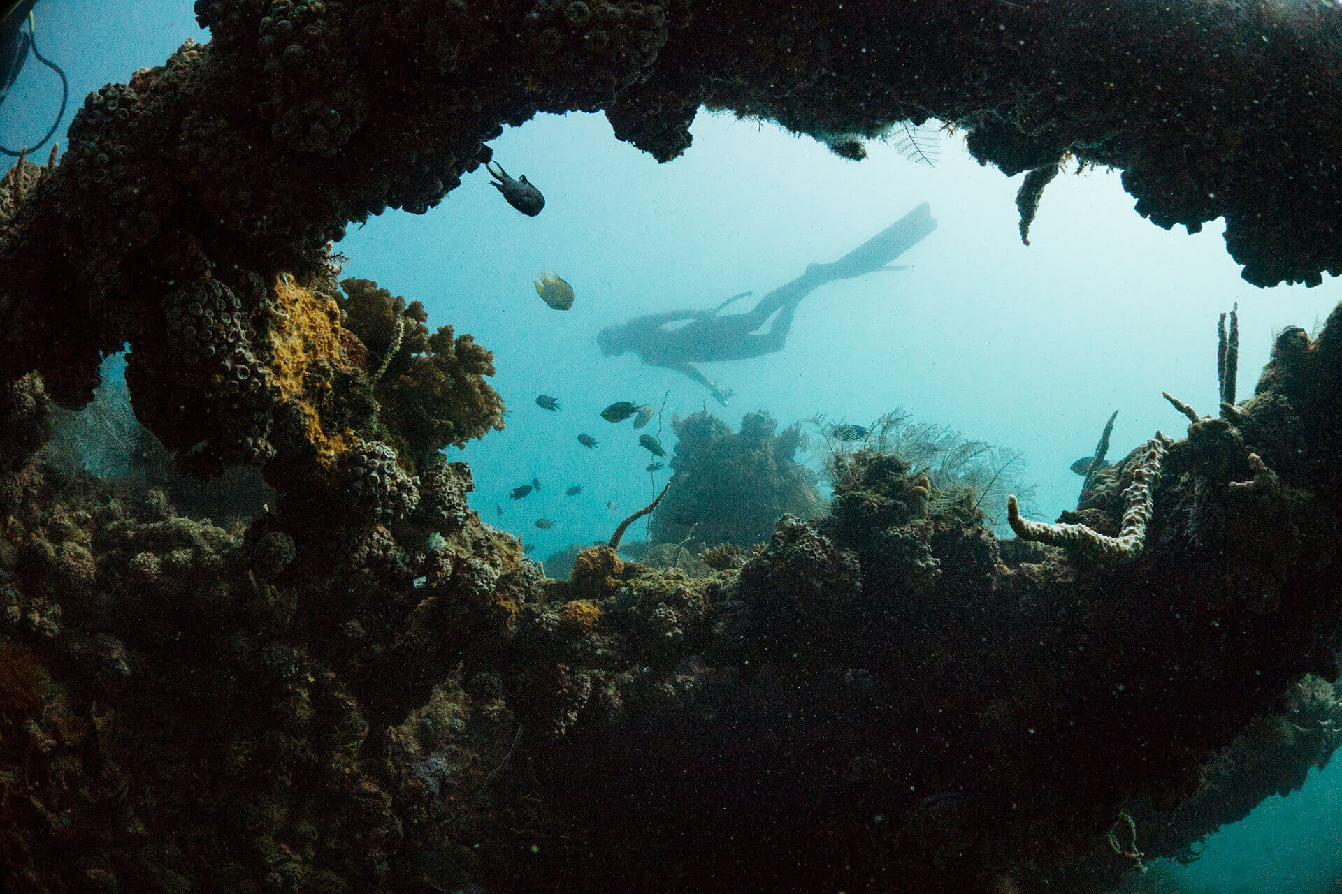 Corals and fish with a diver, photo by Francisco Guerrero
