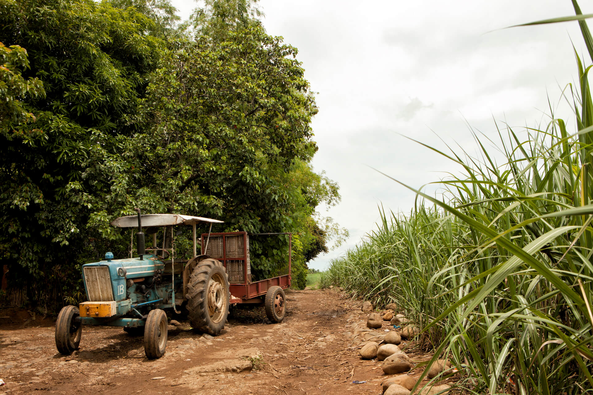 A tractor for breaking cut sugarcane
