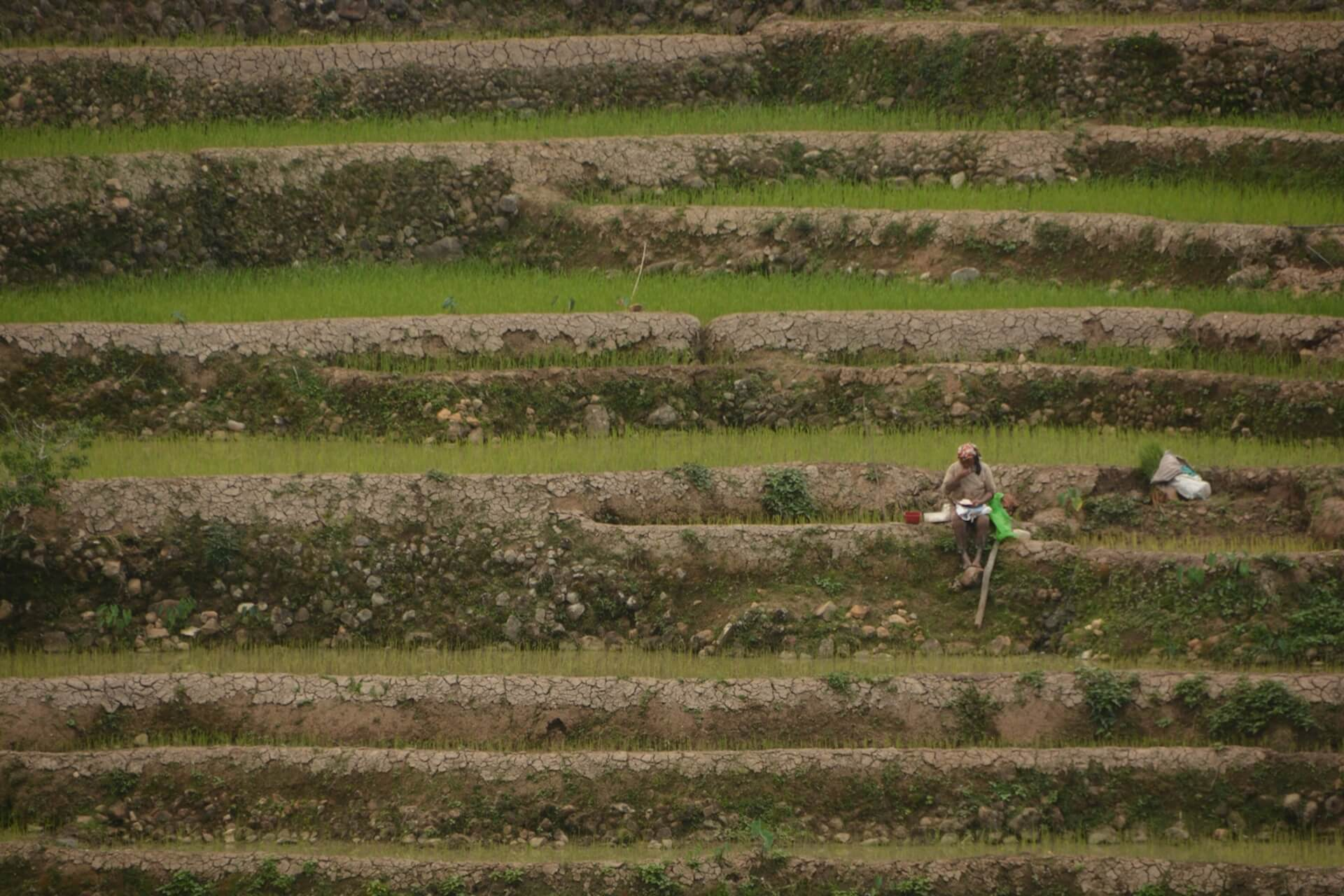 A woman sits on the rice terraces in Bontok