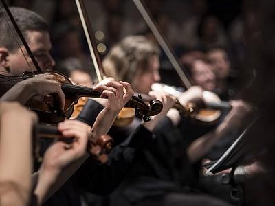 Orchester der Hormone