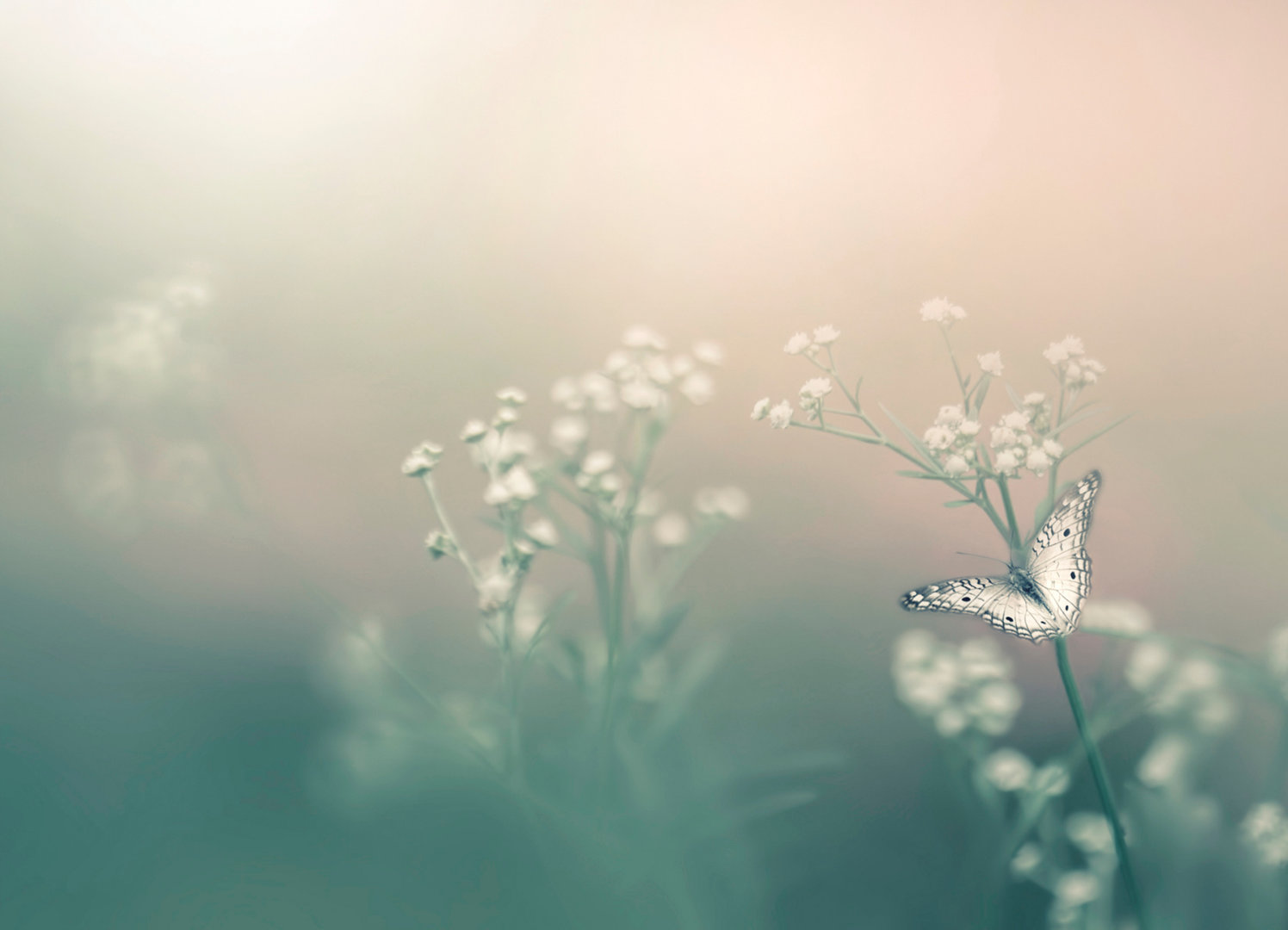 Achtsamkeit und Aromatherapie