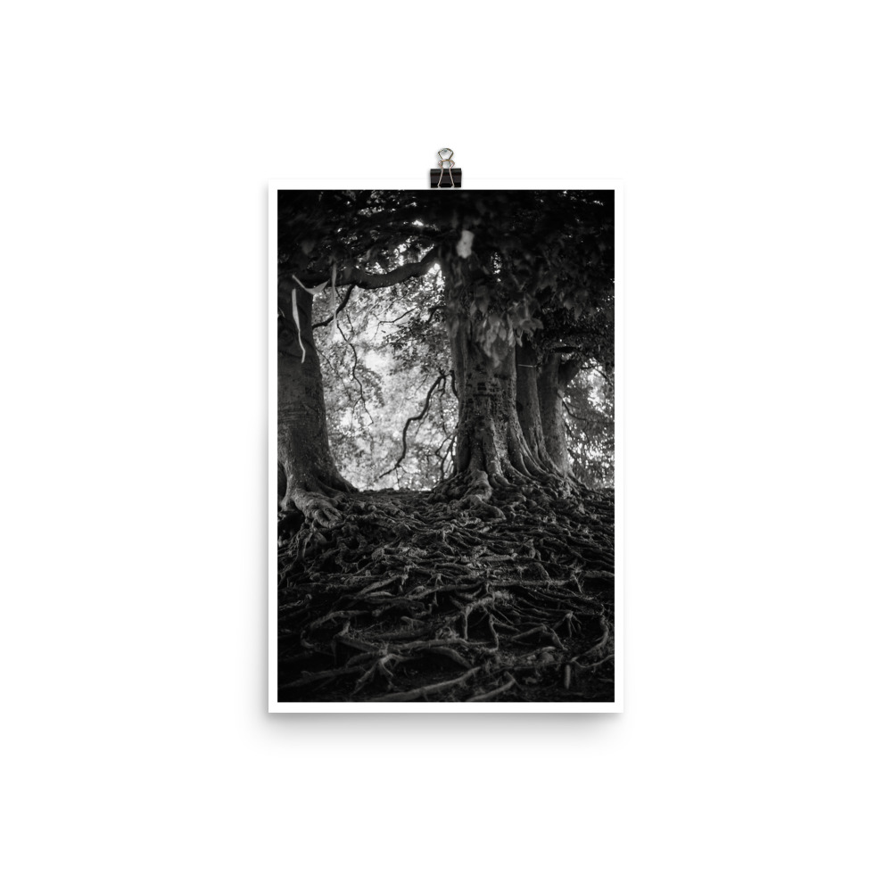 Black and white print of the sacred trees at Avebury