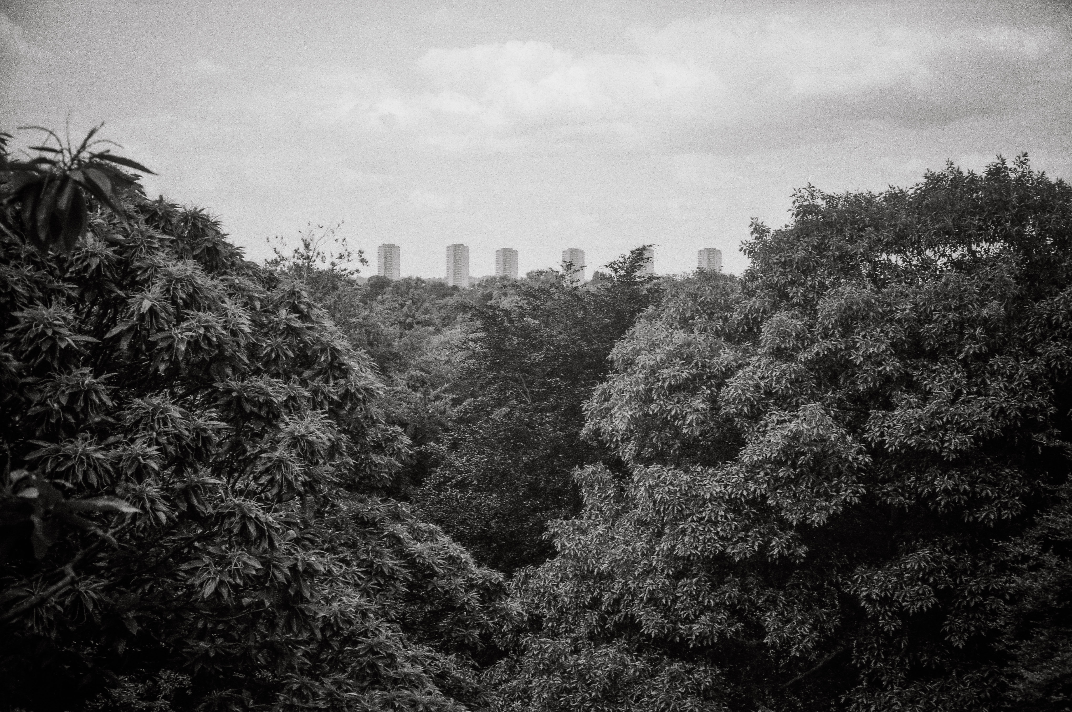 Black and white print of London from Kew