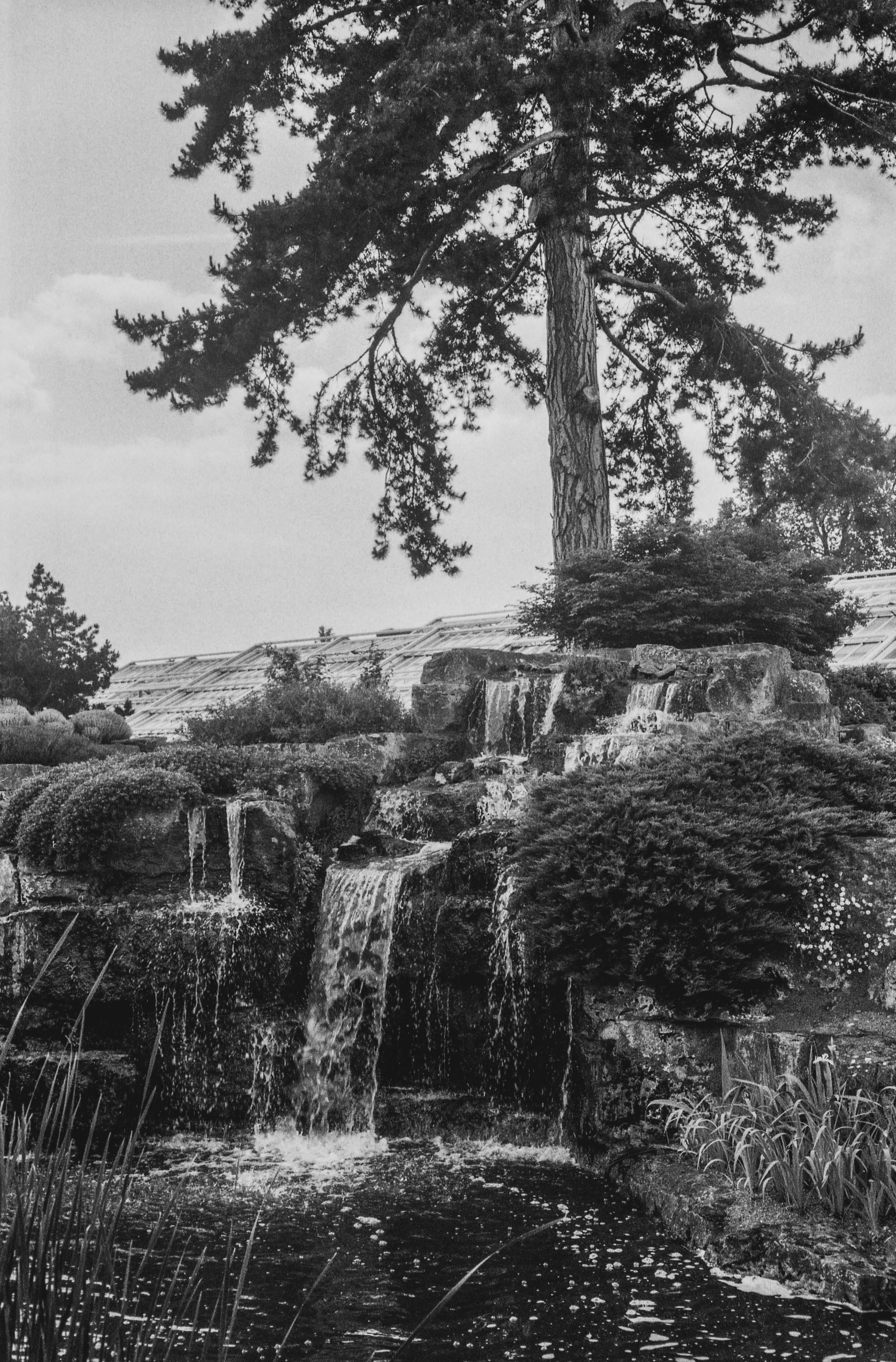 Black and white print of Kew Gardens, London