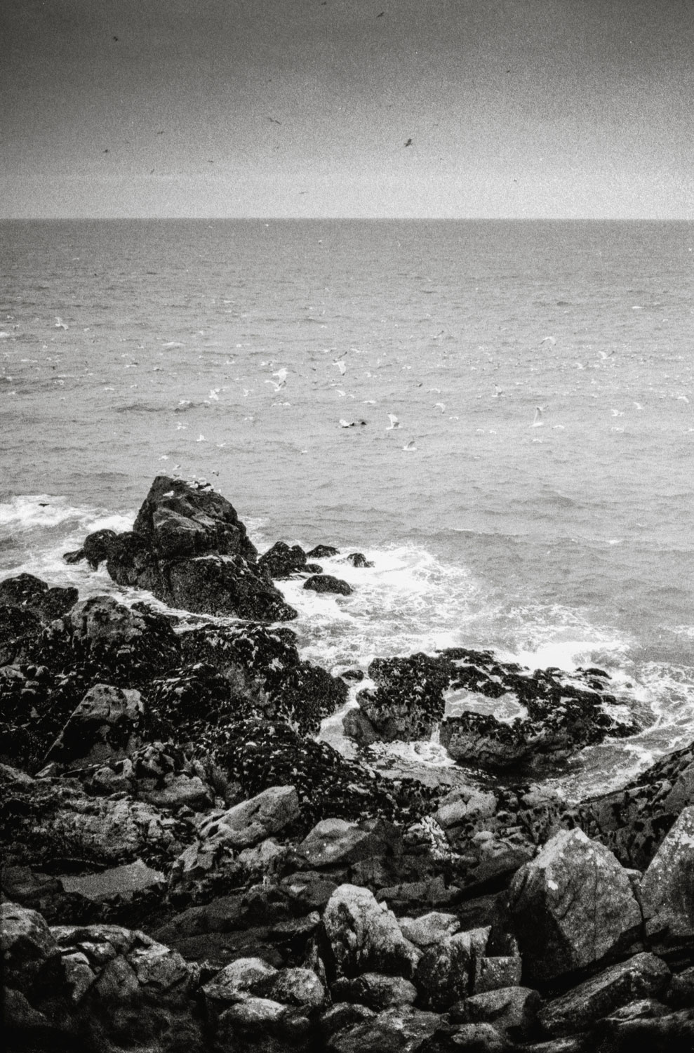 Black and white print of St Ives in Cornwall
