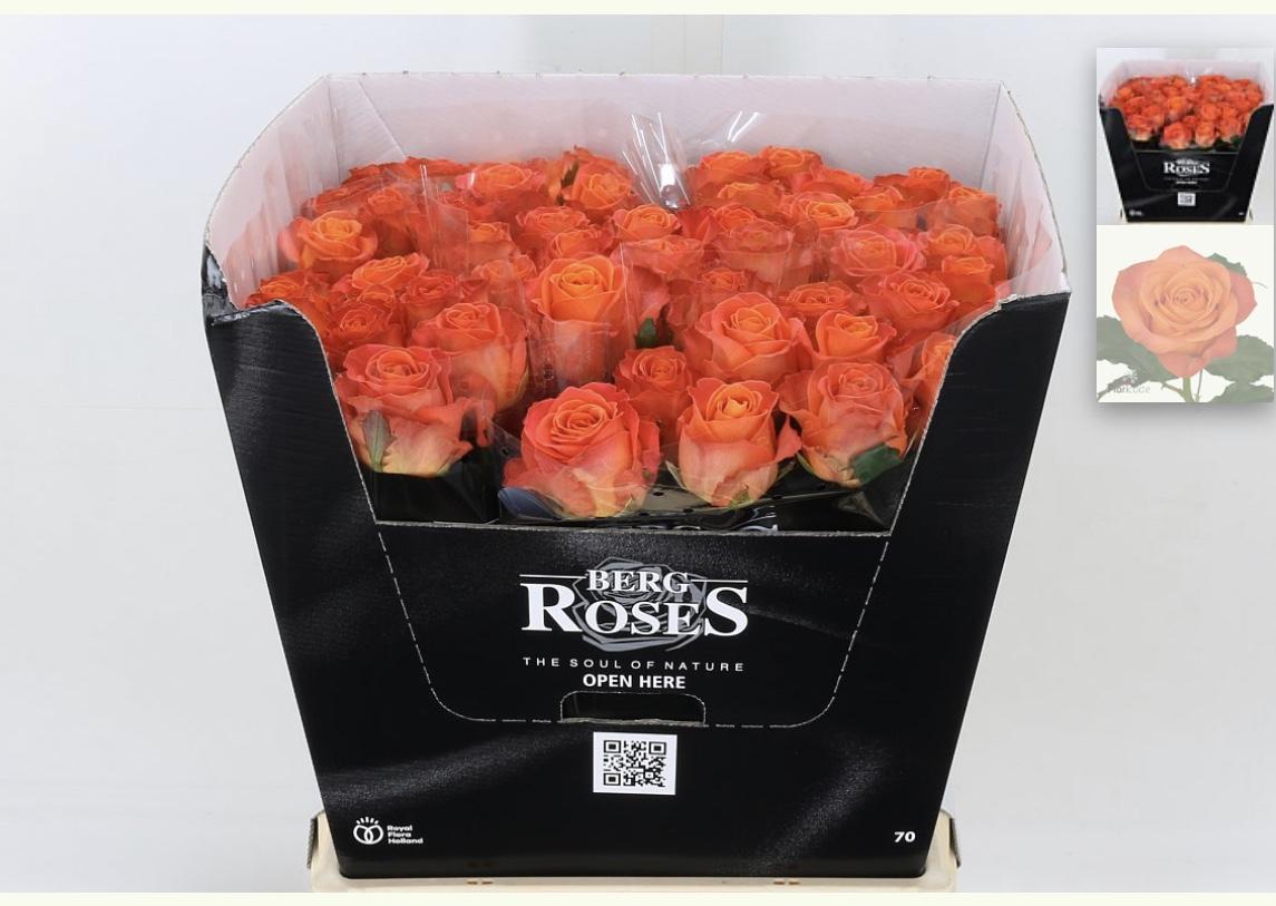 Naranja Roses