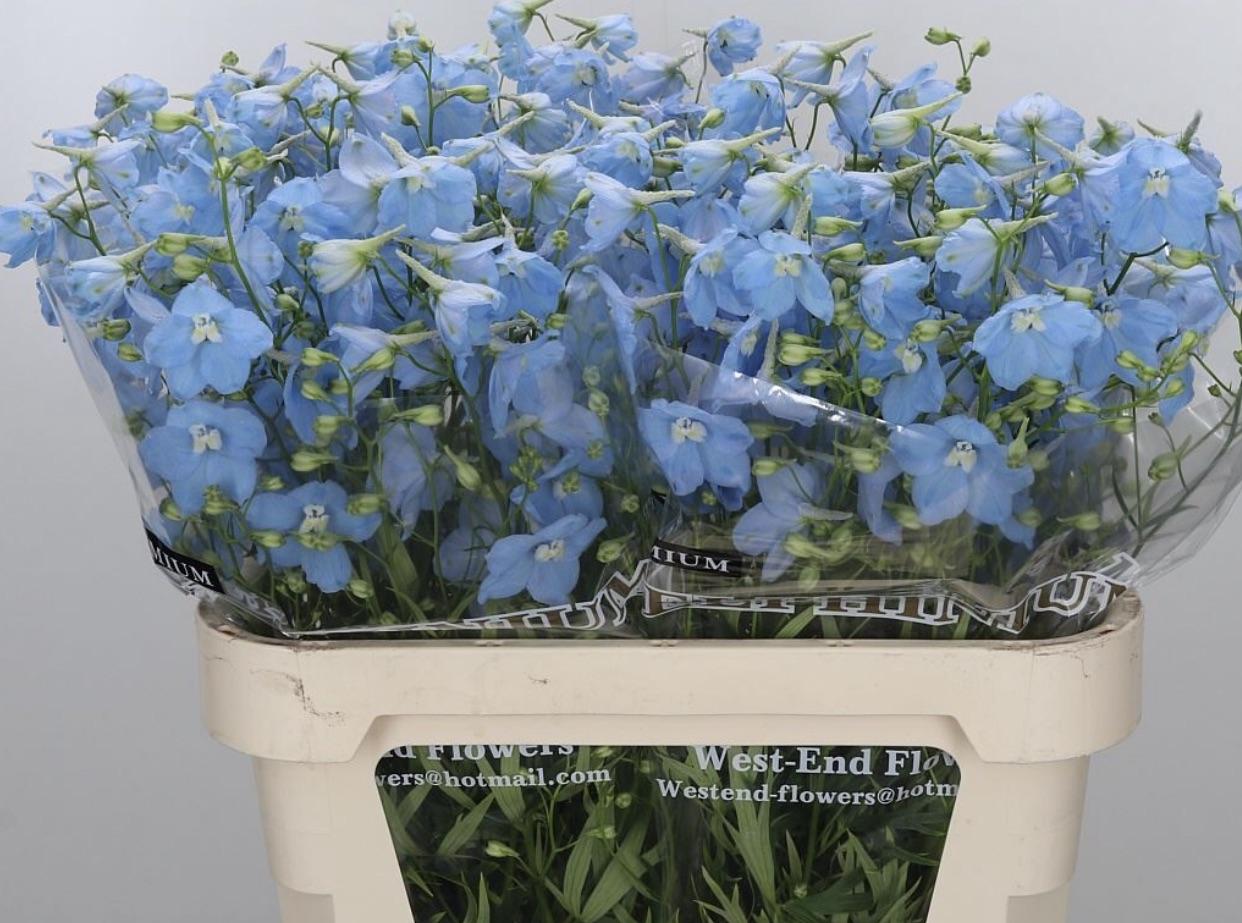 Pale Blue Delphinium