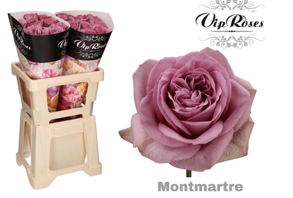 Montmartre Roses