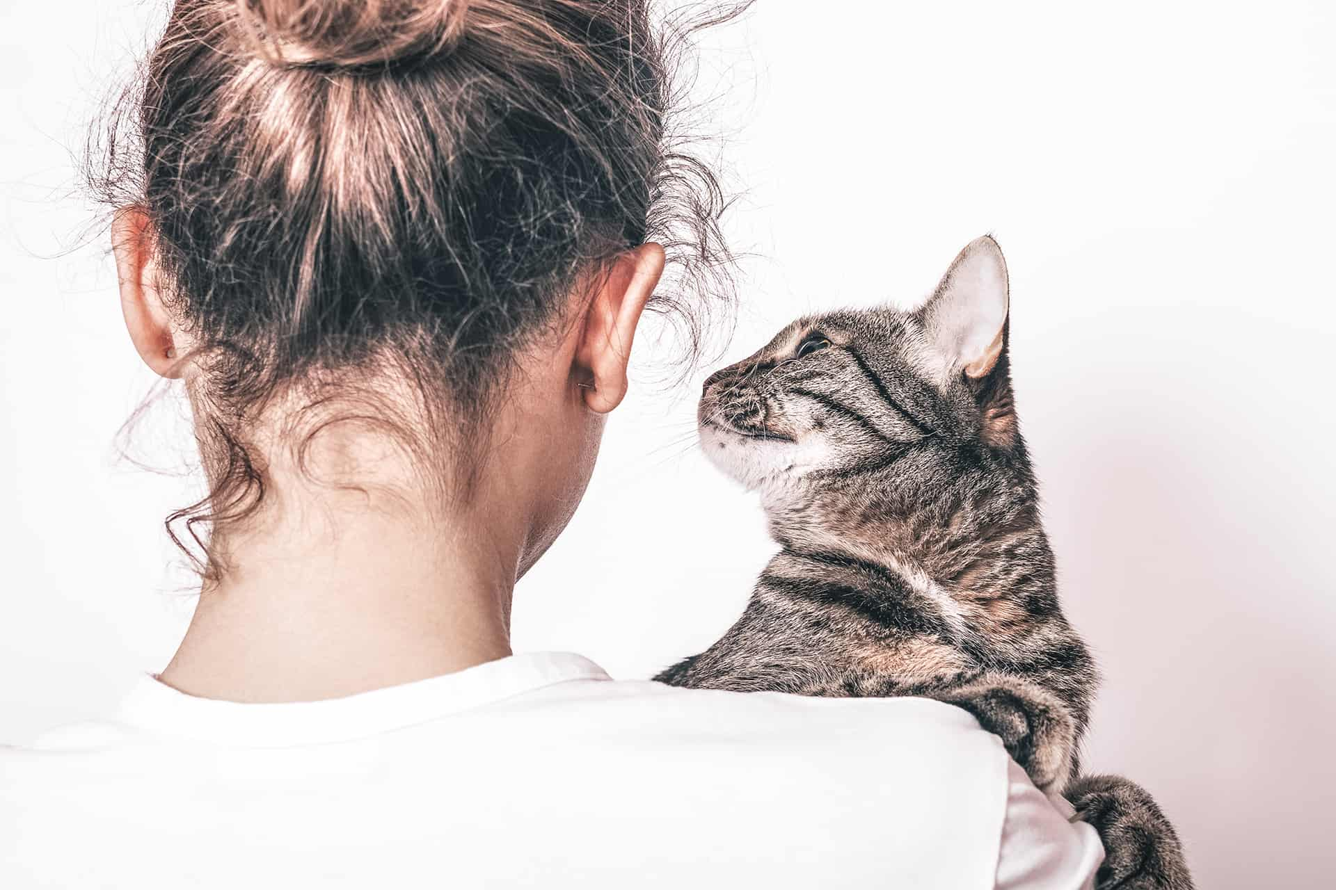 Helpful Links - Our library list of links are a great resource from rescue groups to cat wellness.