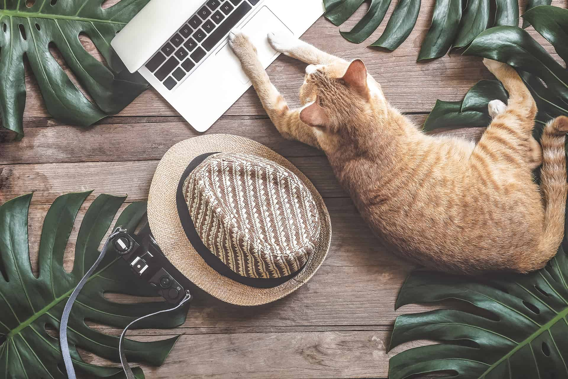 Forms - Whether you're a new client, boarding with us, or need to drop your kitty off for an appointment, filling out these forms will speed up the process.