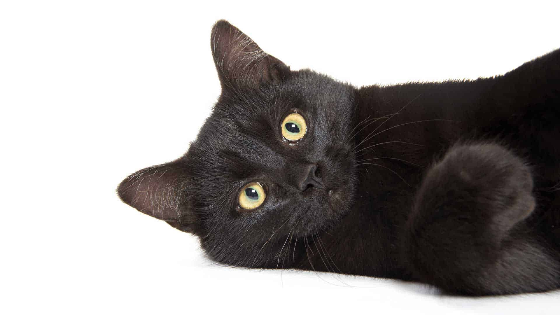 A black cat with beautiful, large eyes laying on his side looking at the camera.