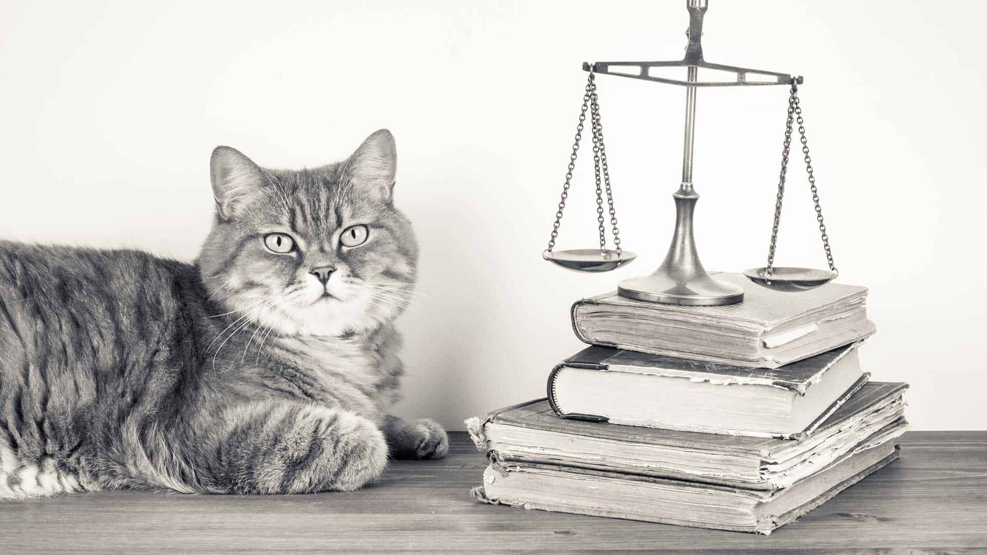 Legal cat with the scales of justice and law books
