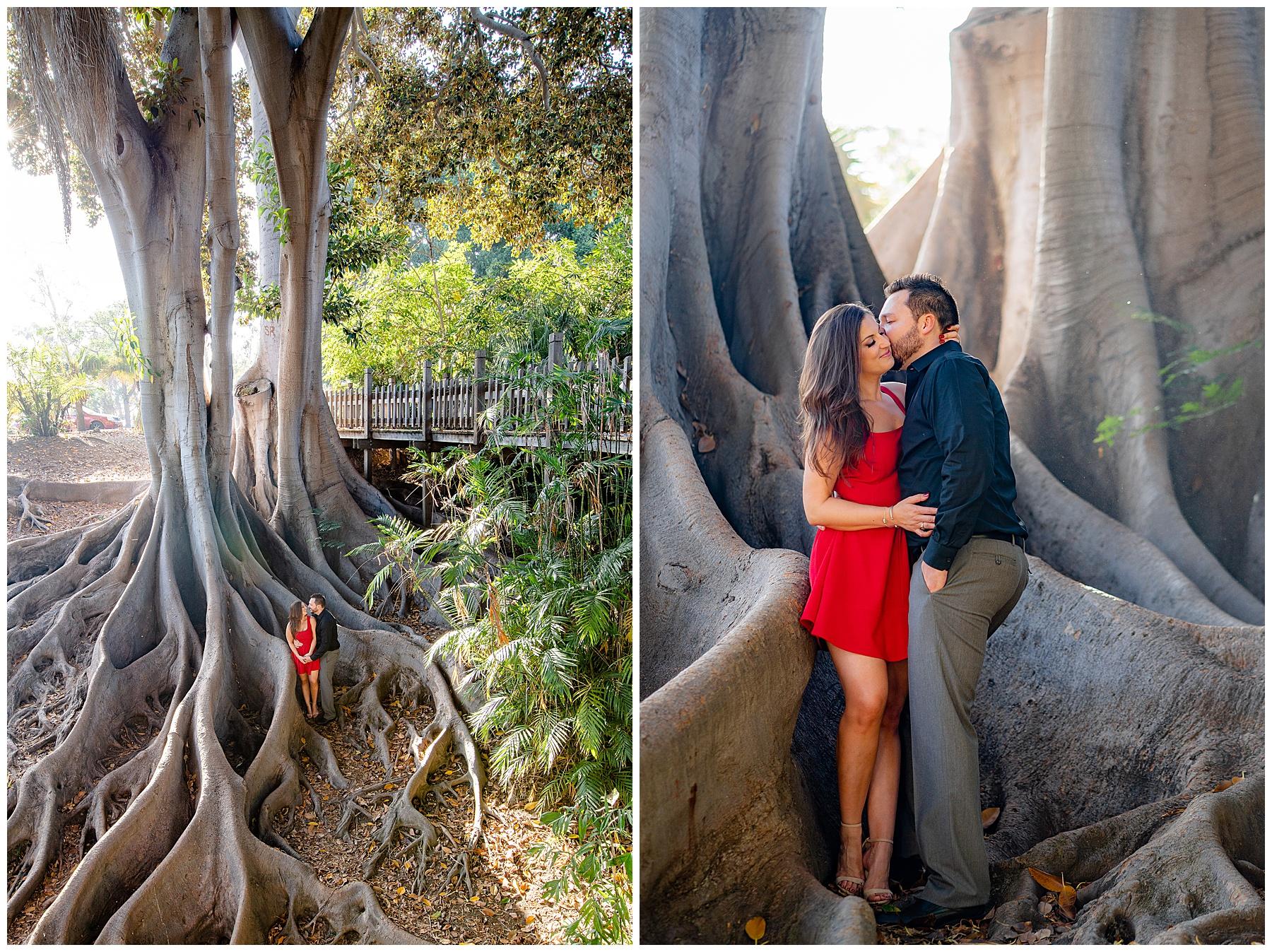 balboa park tree engagement photo
