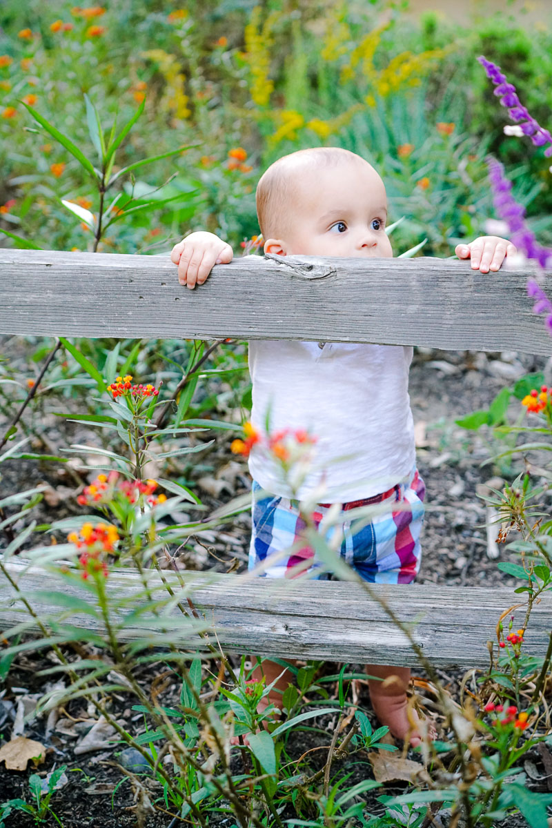 little boy peaking through fence with flowers