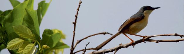 Birds on Organo