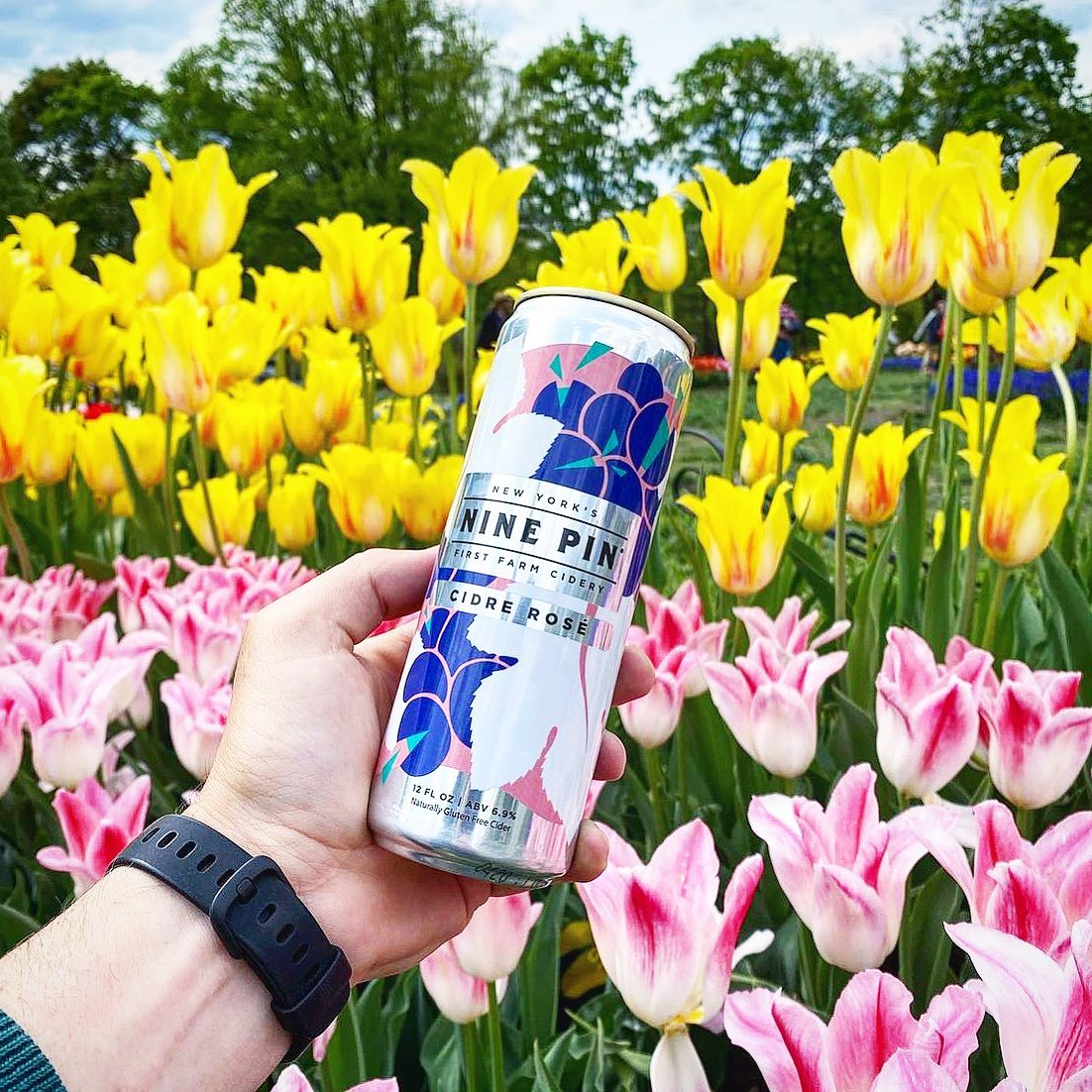 Blue, white and pink Nine Pin Cidre Rosé can in front of yellow and pink tulips