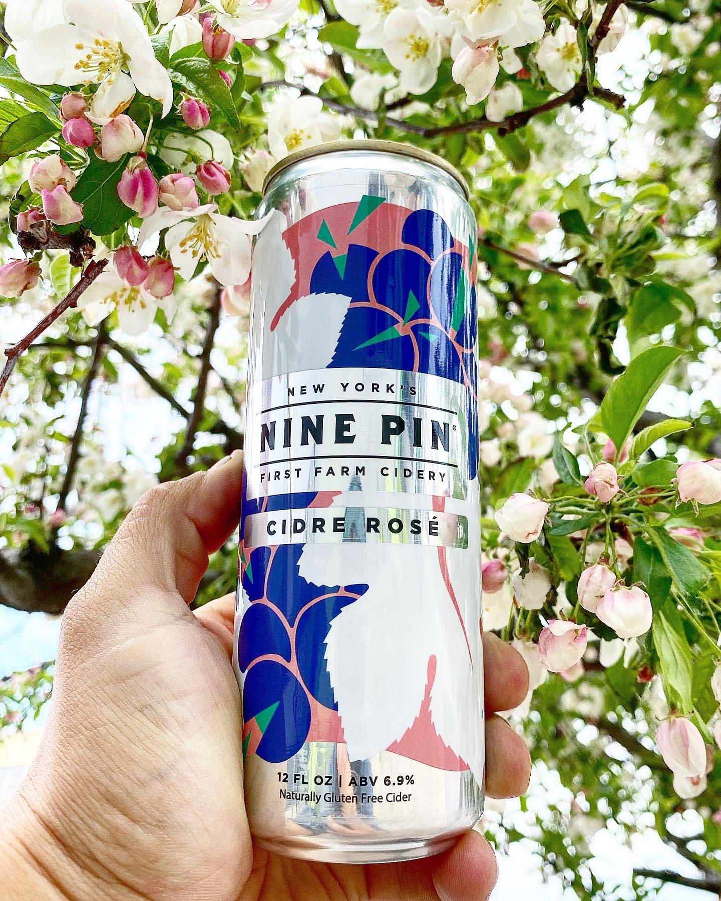 Blue, white and pink Nine Pin Cidre Rosé can in front of a blossoming apple tree