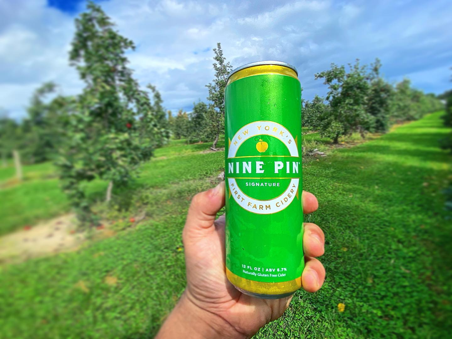 Picture of Nine Pin Signature Cider in a New York apple orchard.
